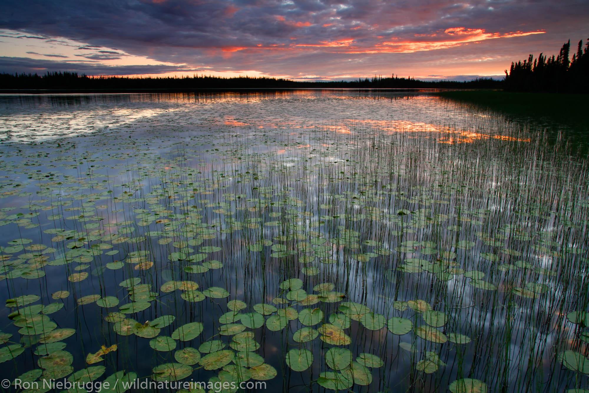 etlin National Wildlife Refuge, Alaska., photo