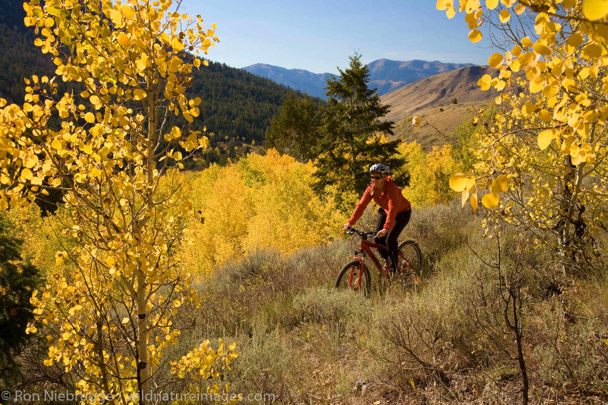 Mountain biking in Bridger-Teton National Forest, Jackson Hole, Wyoming.