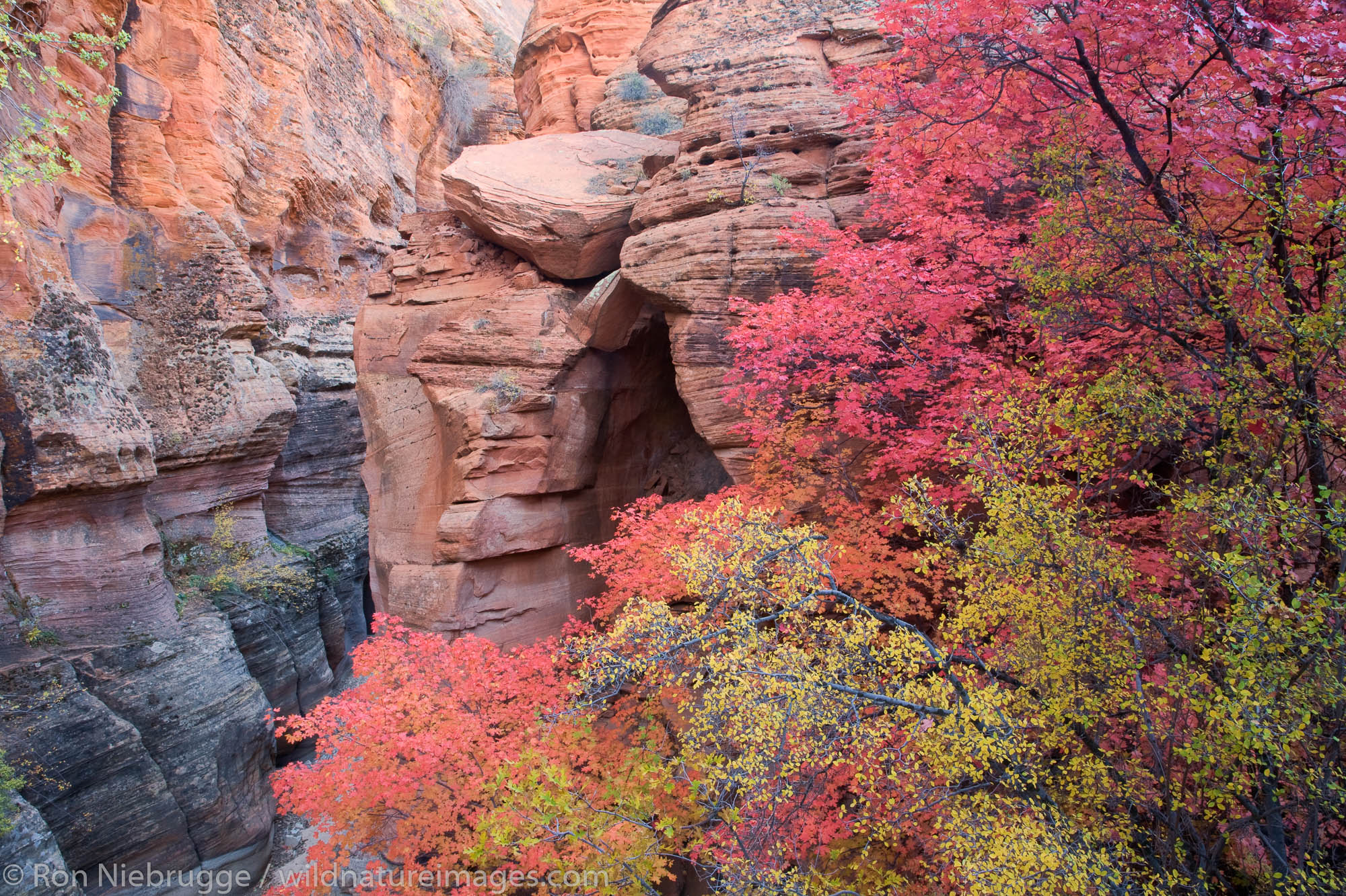 Autumn colors in Zion National Park, Utah.