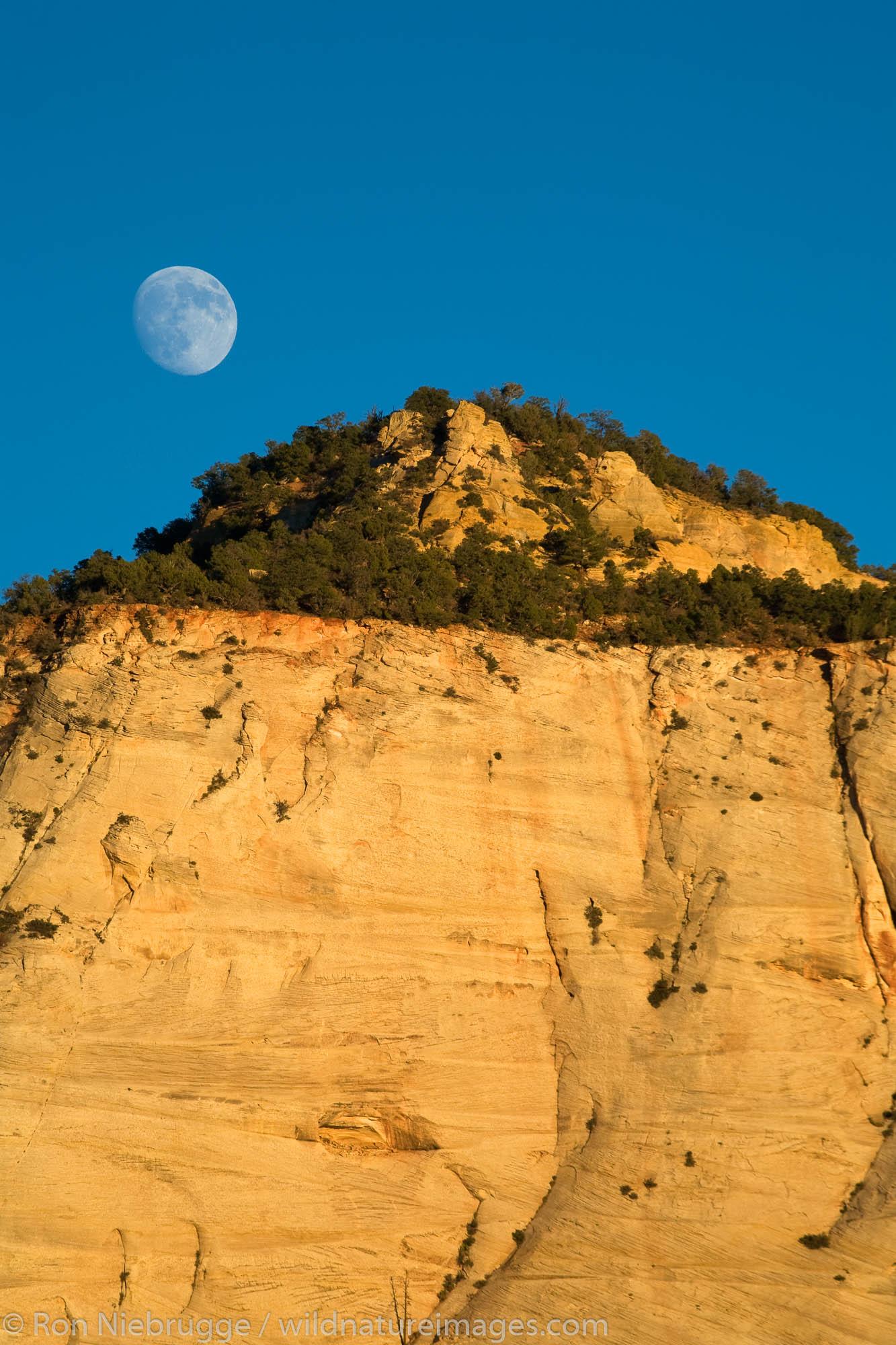 Full moon over Checkboard Mesa, Zion National Park, Utah.