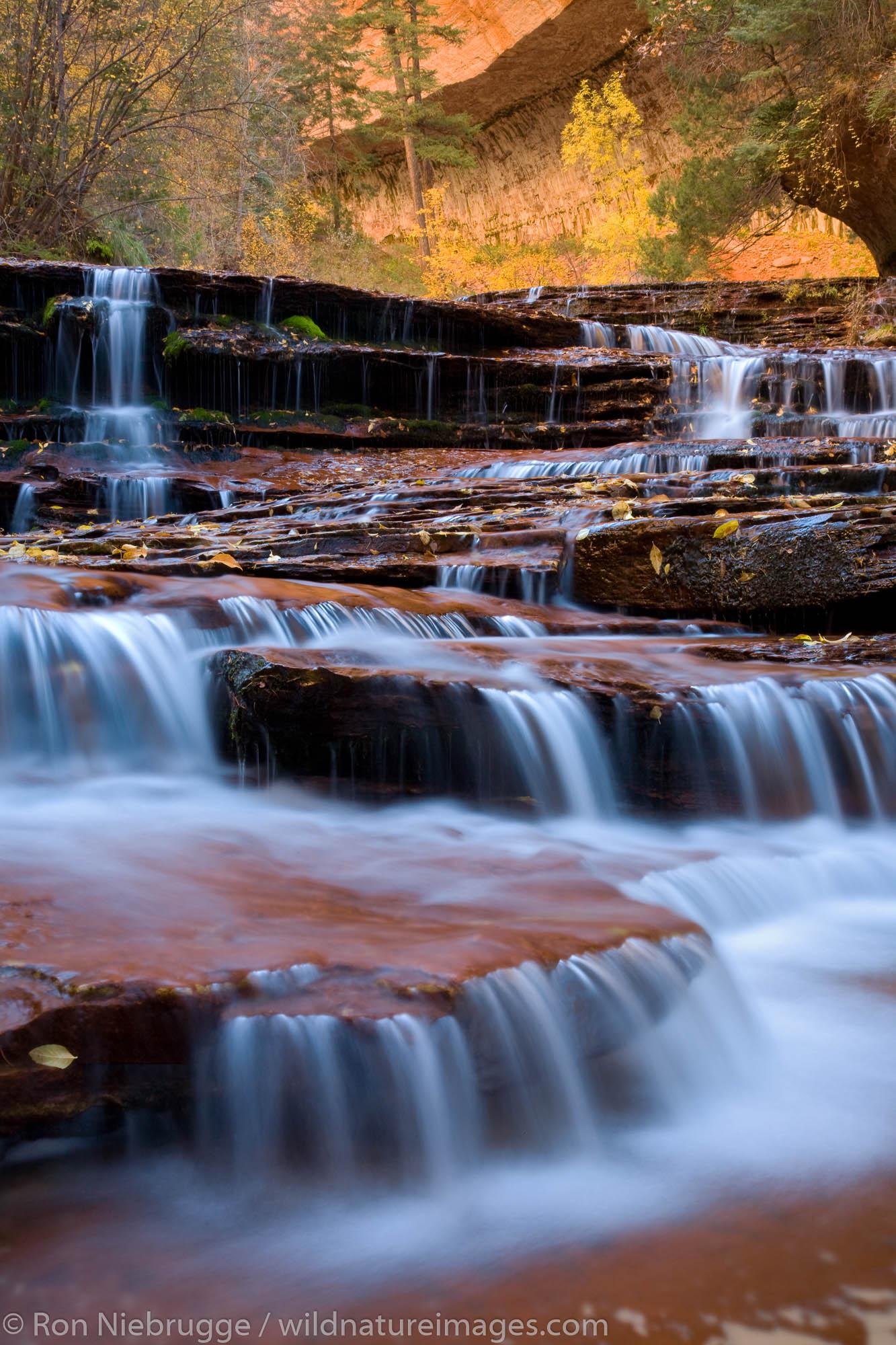 Left Fork of North Creek, Zion National Park, Utah.