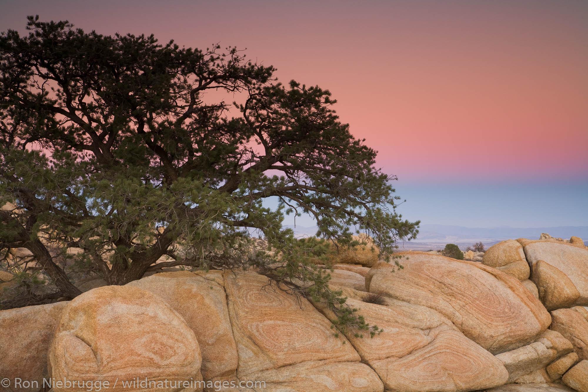 Mojave Desert, near Pioneertown, California.