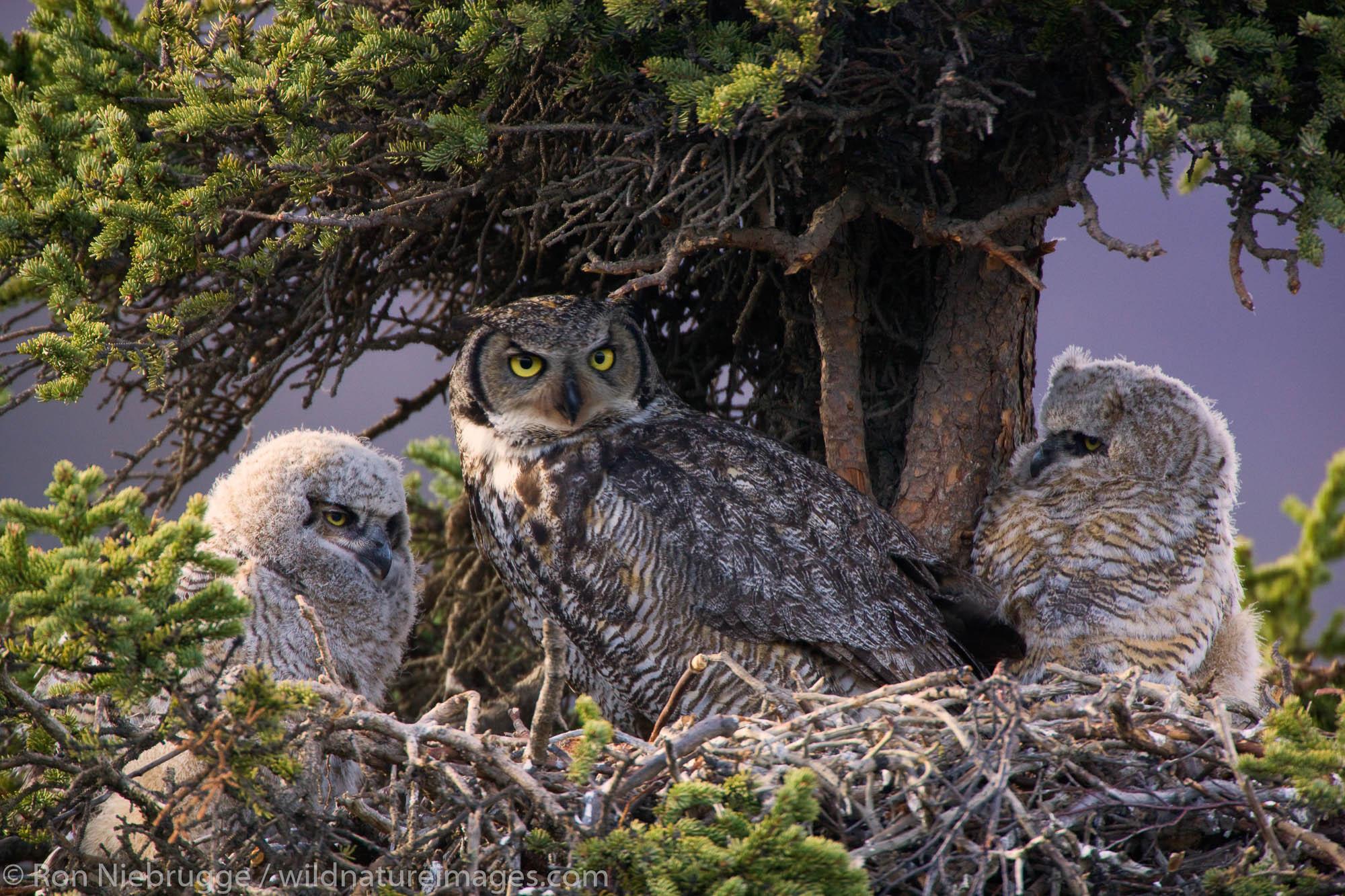 Denali National Park, Alaska, photo, picture, bird, photos, photo