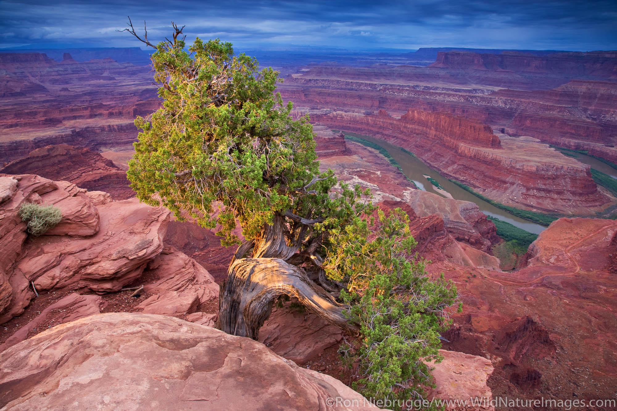 View from Dead Horse Point in Dead Horse State Park, looking into Island in the Sky District, Canyonlands National Park, near...