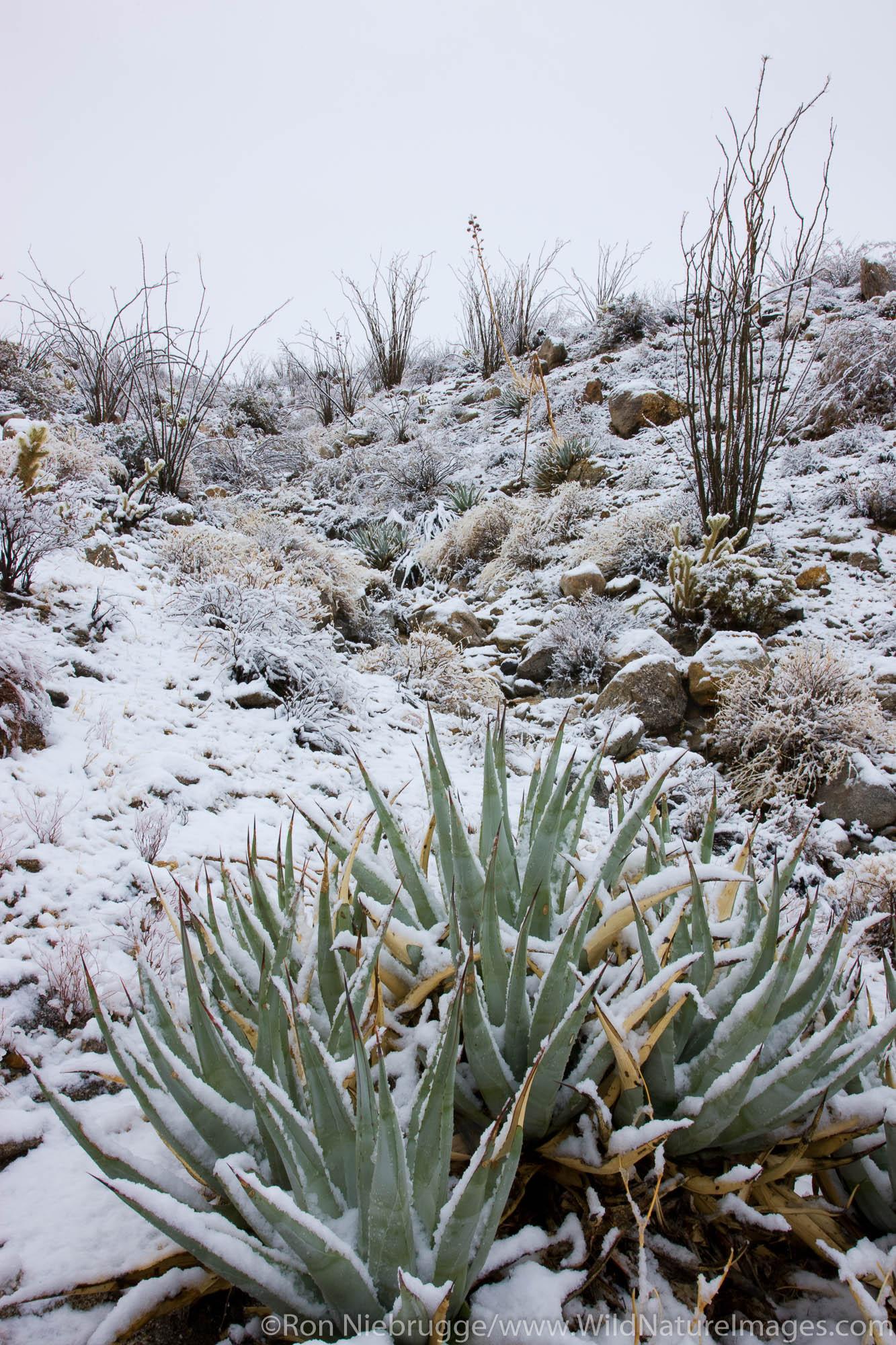 Snow in Anza-Borrego Desert State Park, California.