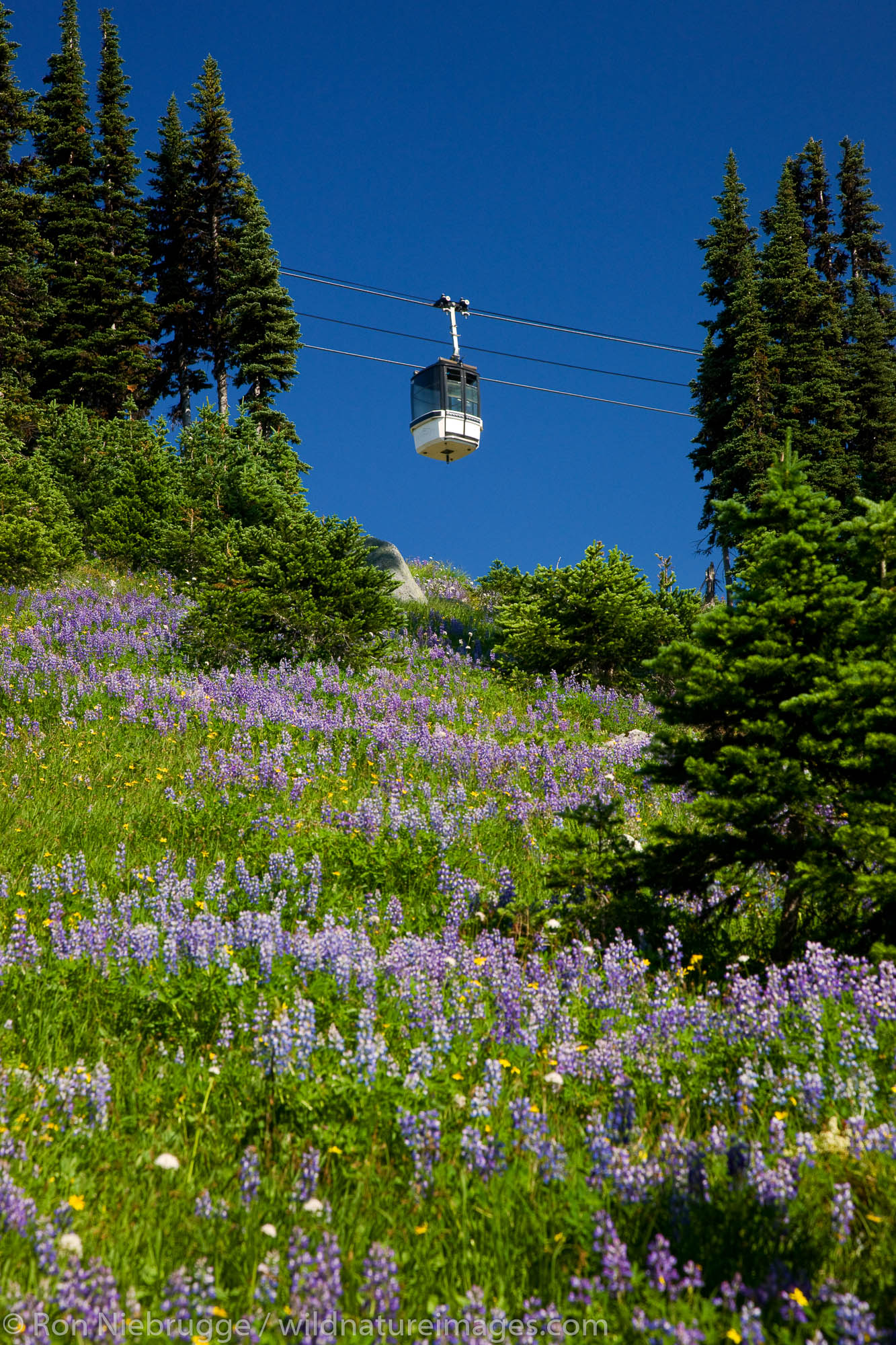 Whistler Village Gondola, Whistler Mountain, Whistler, British Columbia, Canada.