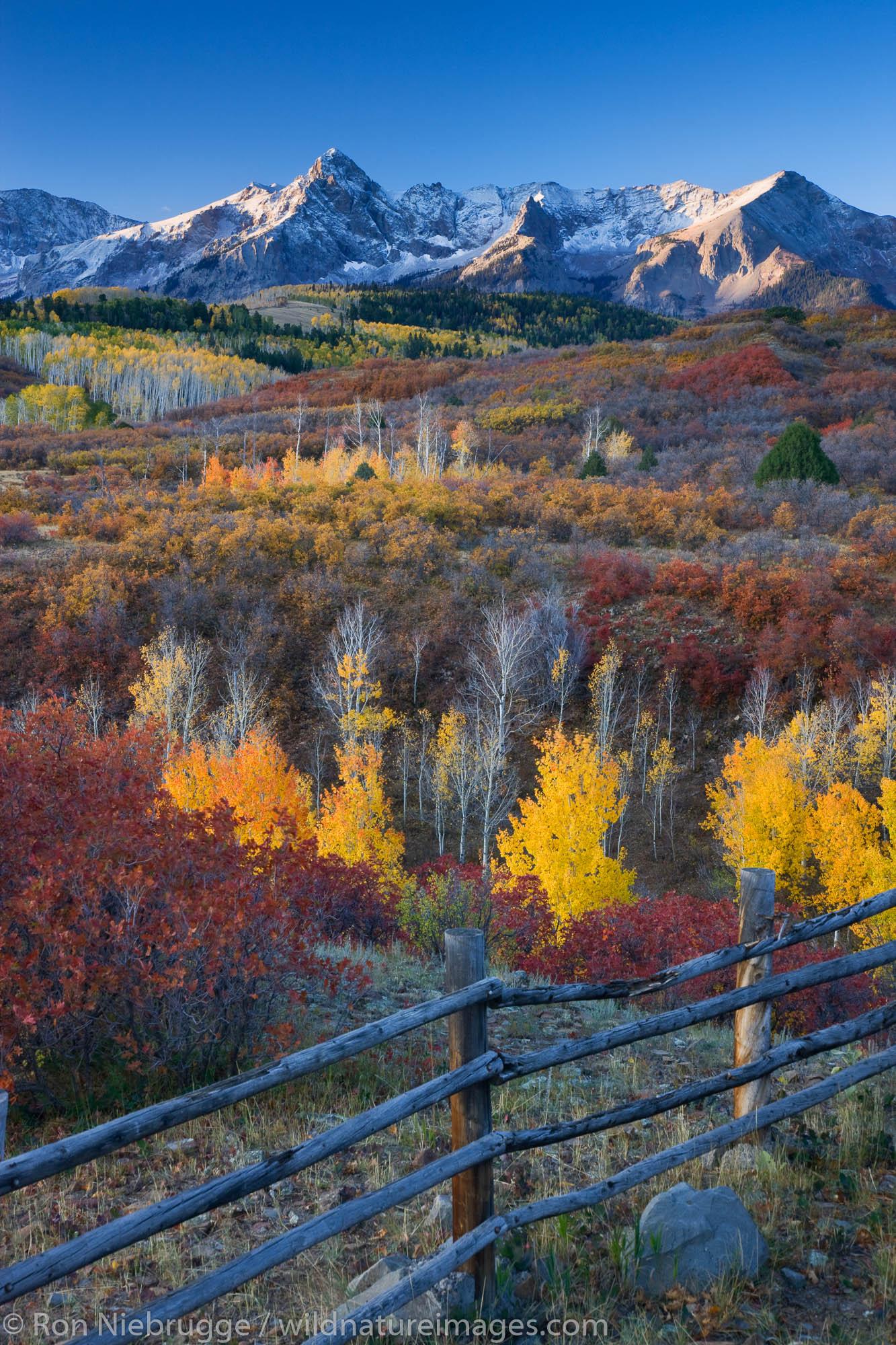Autumn colors and the Sneffels Range, San Juan Mountains, Dallas Divide,  Colorado.