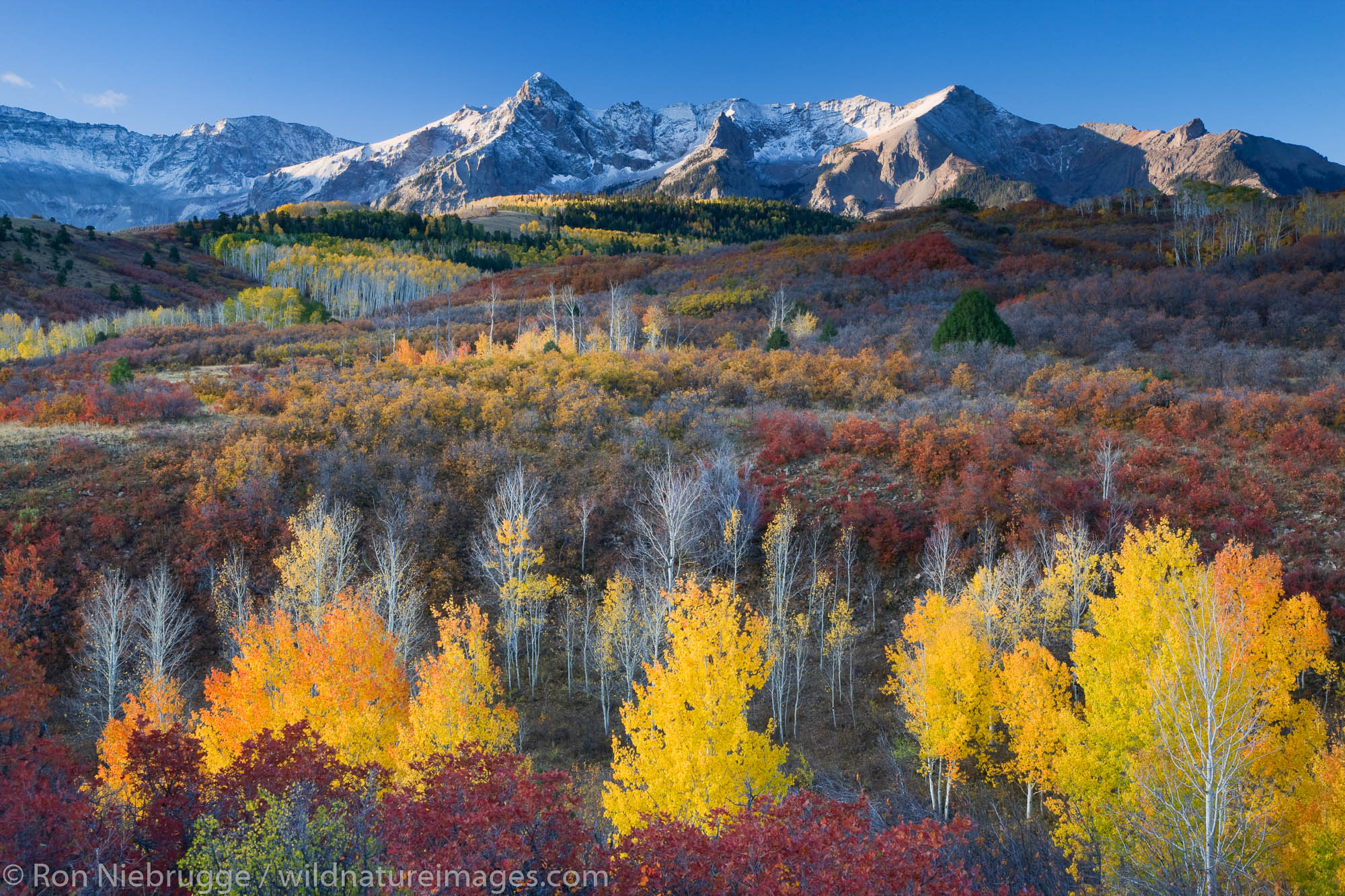 Autumn colors and the Sneffels Range, San Juan Mountains, Dallas Divide,  Colorado.