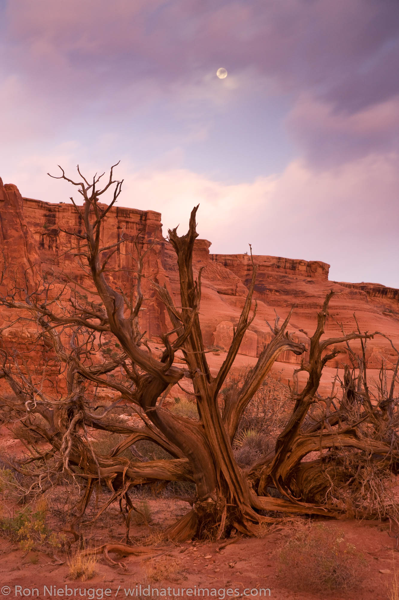 Courthouse Towers area, Arches National Park, Moab, Utah.