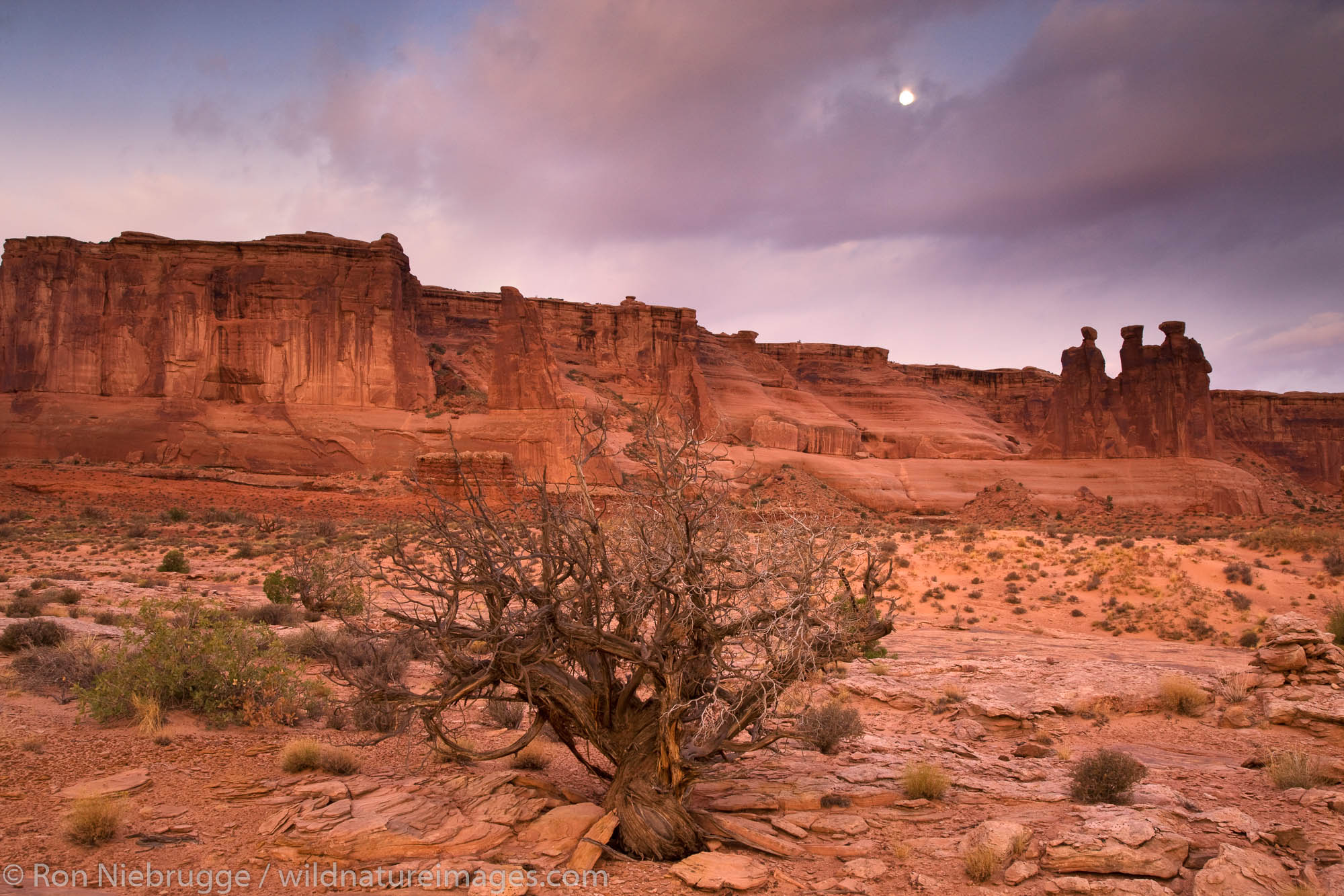 TheThree Gossips in Courthouse Towers area, Arches National Park, Moab, Utah.