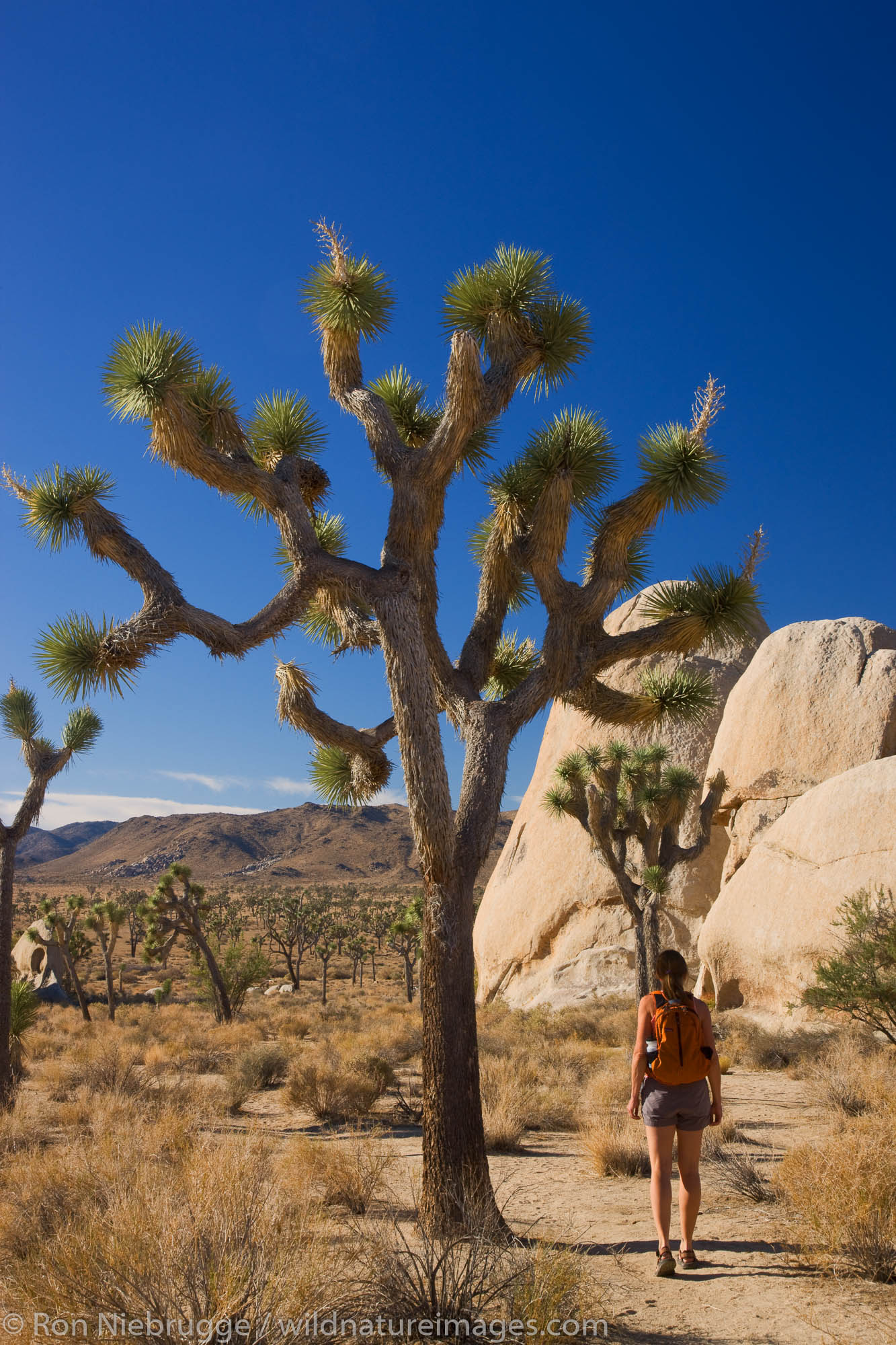 A hiker in Joshua Tree National Park, California.  (Model released)