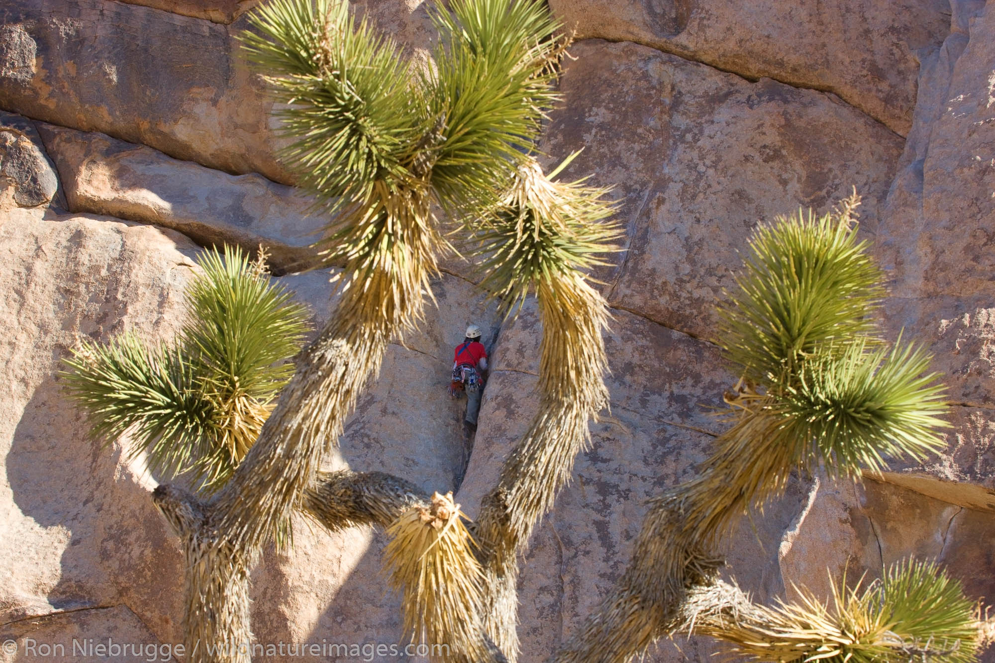 Rock climbers in Joshua Tree National Park, California.  (Model released)
