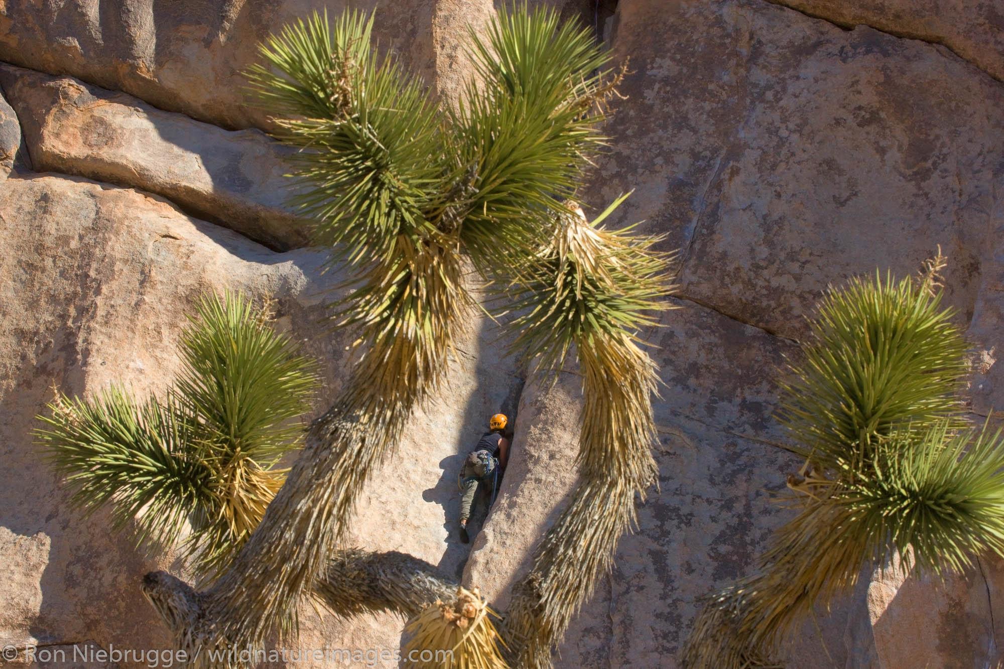 Rock climbers in Joshua Tree National Park, California.  (Model released)