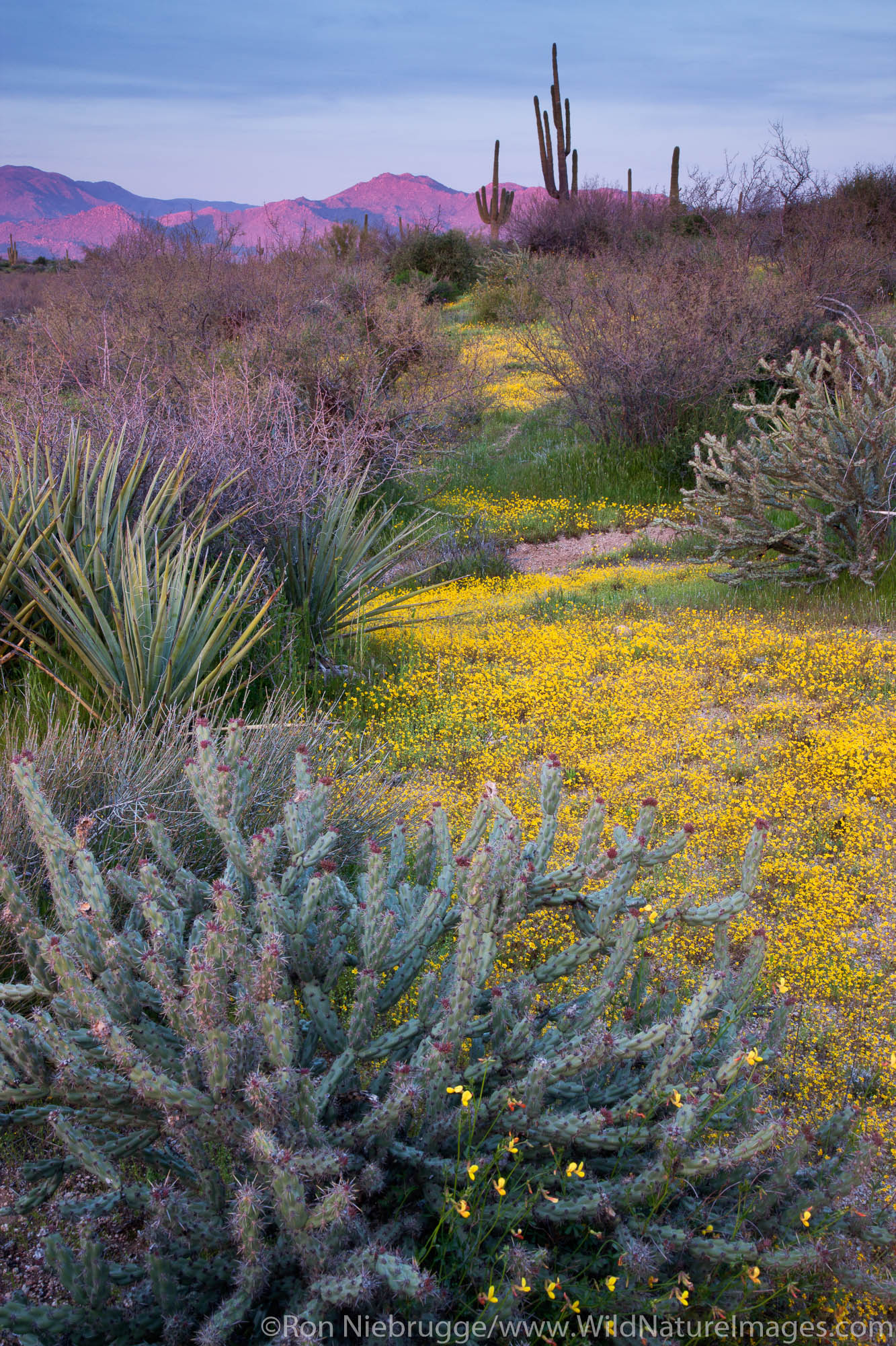 Tonto National Forest, East of Phoenix, Arizona.
