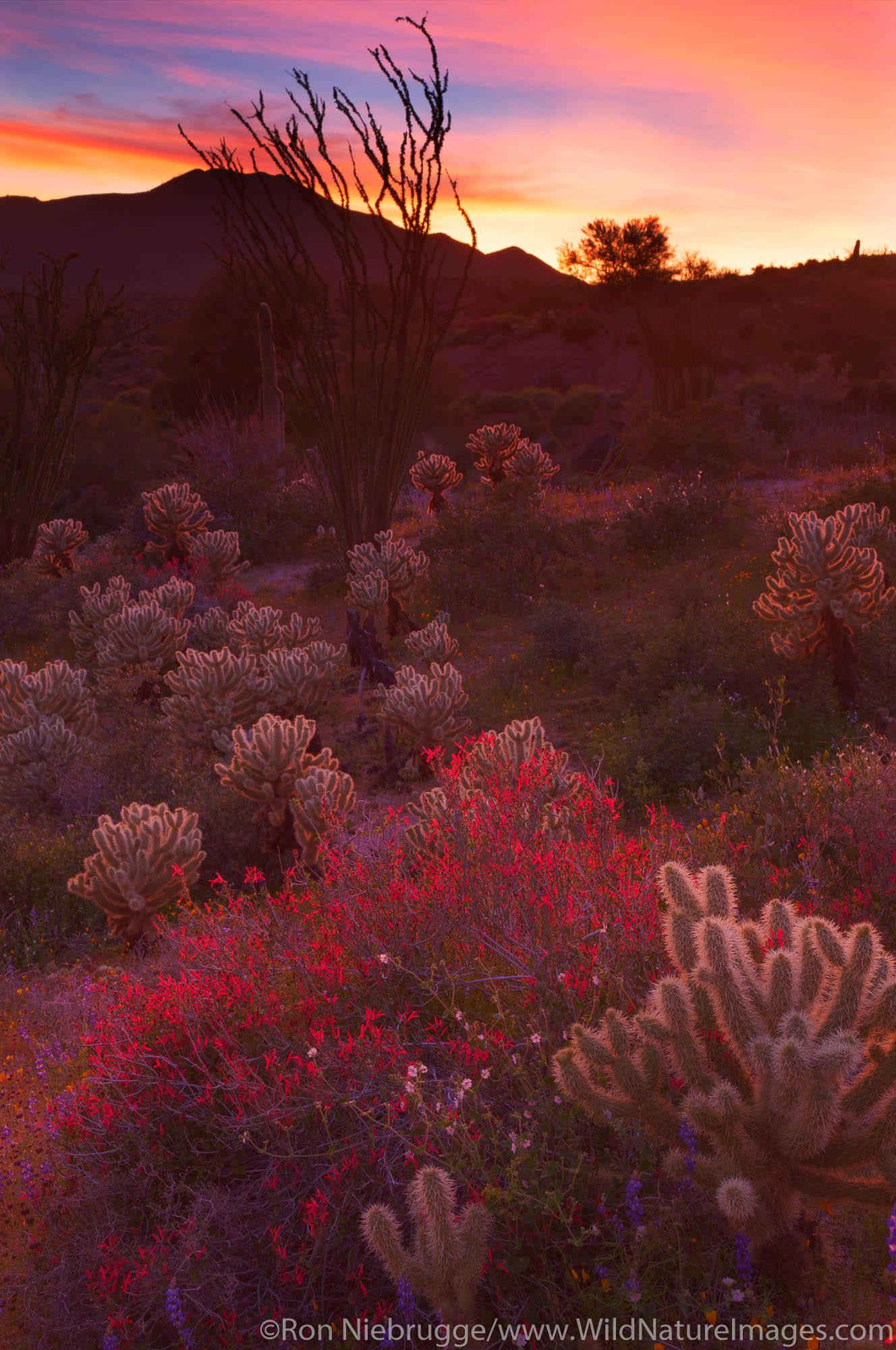 Wildflowers near Bartlett Lake, Tonto National Forest, near Phoenix, Arizona.