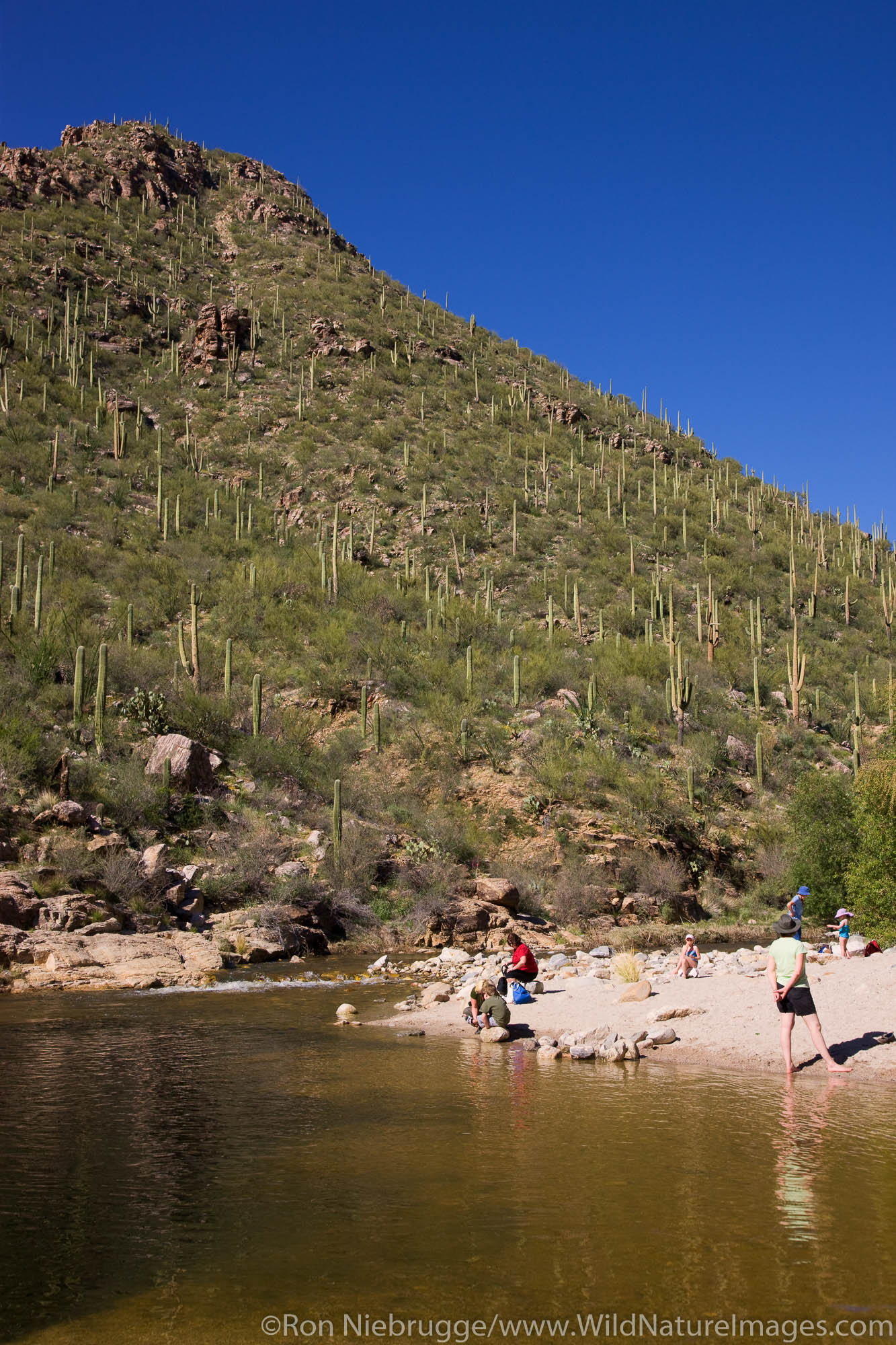 Visitors enjoy Sabino Creek, Sabino Canyon Recreation Area, Tucson, Arizona.