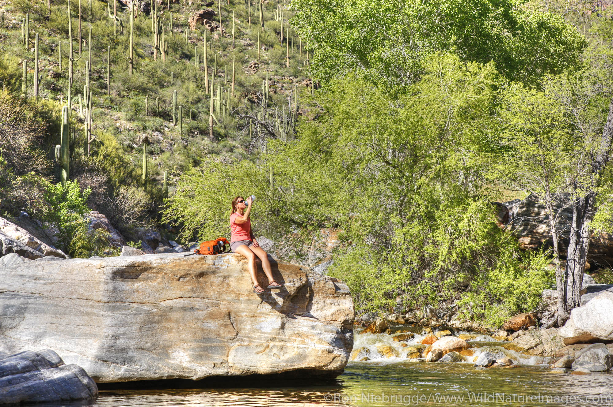 Hiker enjoying Sabino Creek, Sabino Canyon Recreation Area, Tucson, Arizona.  (model released)