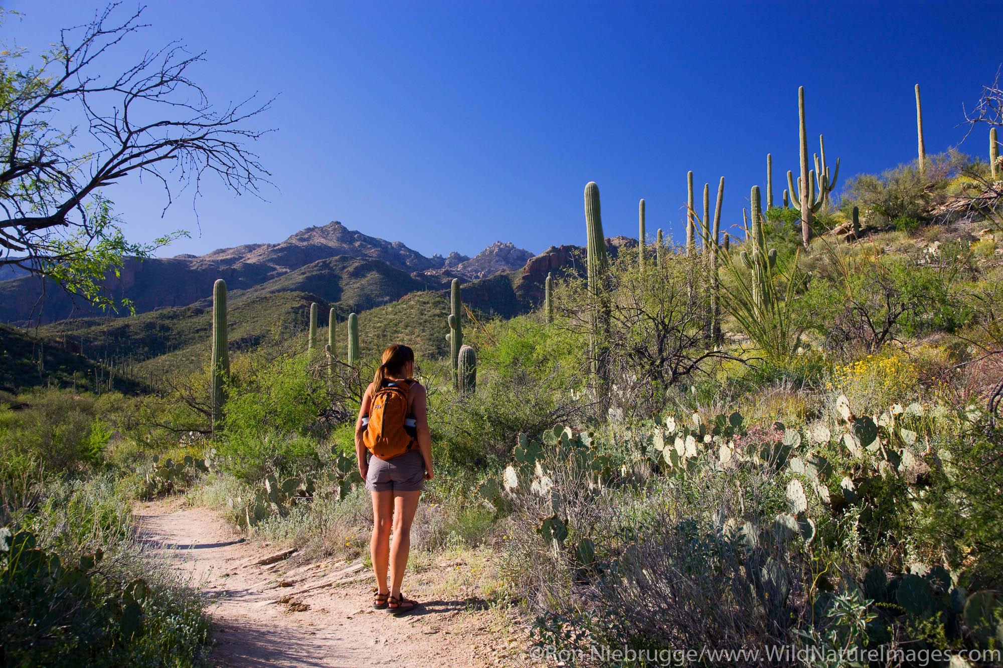 Hiker in Sabino Canyon Recreation Area, Tucson, Arizona.  (model released)