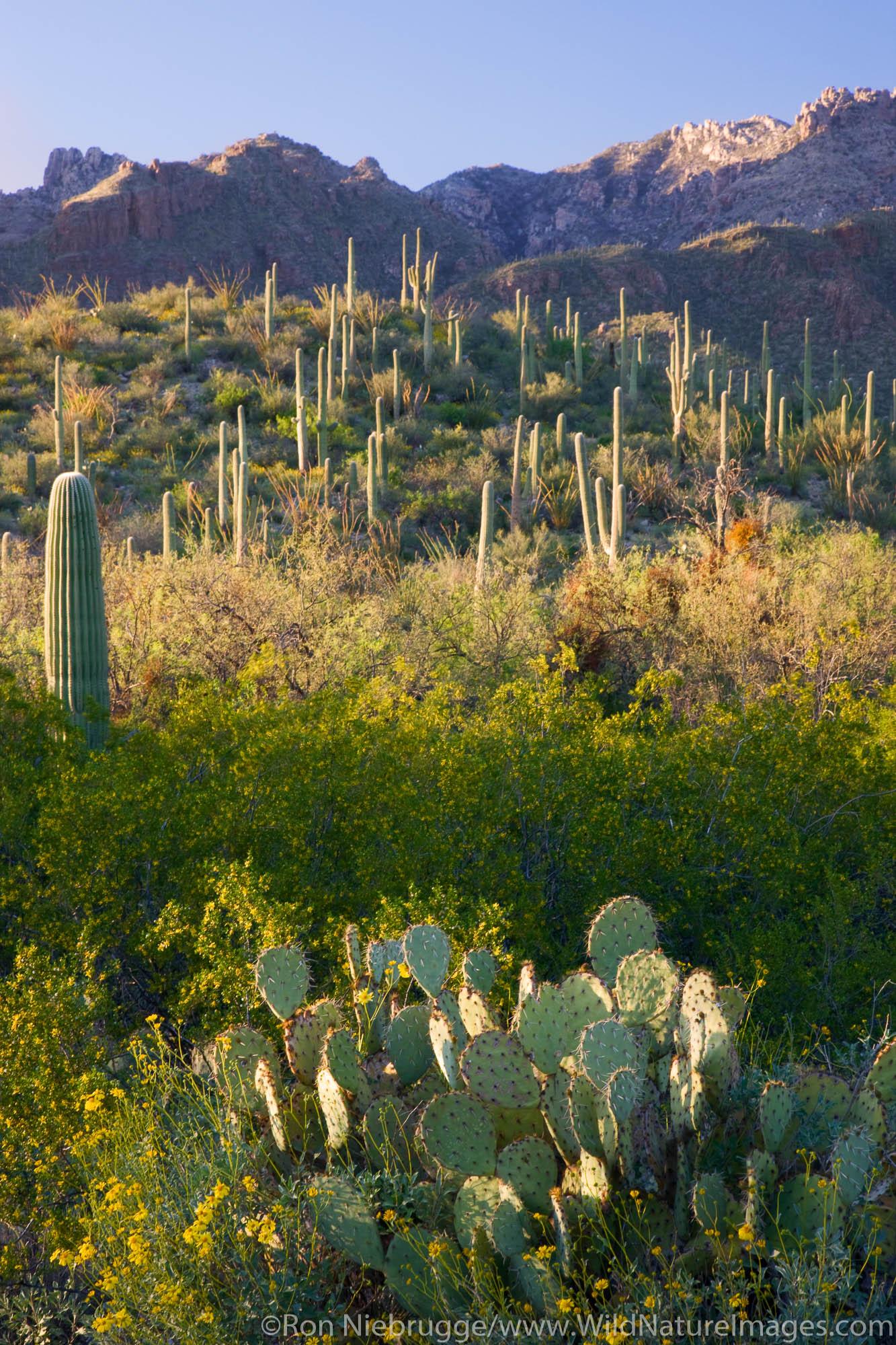 Sabino Canyon Recreation Area, Tucson, Arizona.