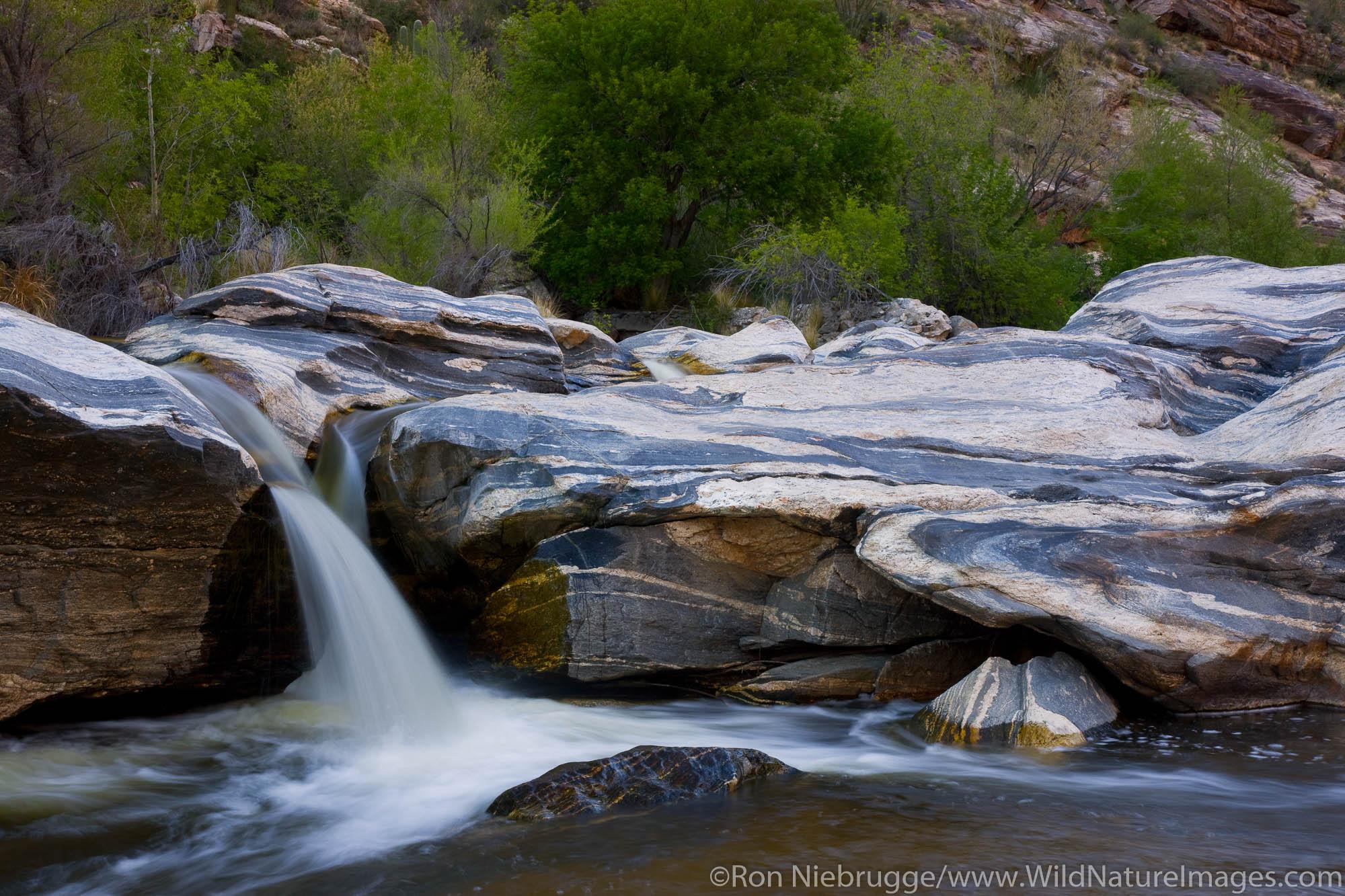 Sabino Creek, Sabino Canyon Recreation Area, Tucson, Arizona.