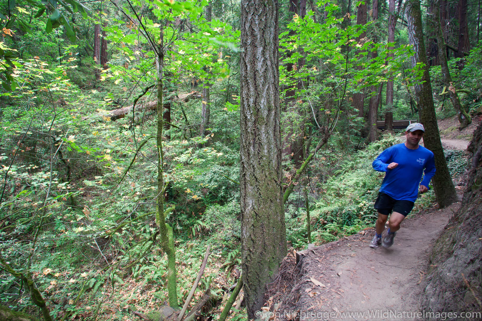 Trail running in The Forest of Nisene Marks State Park, Aptos, California (model released)