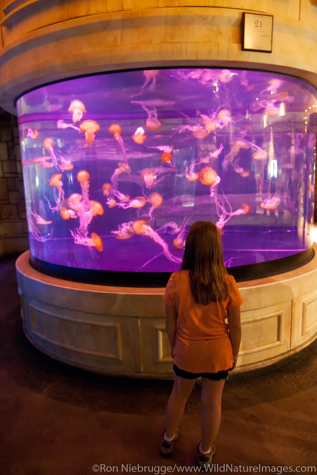 Shark Reef, Mandalay Bay Hotel and Casino, Las Vegas, Nevada (model released)