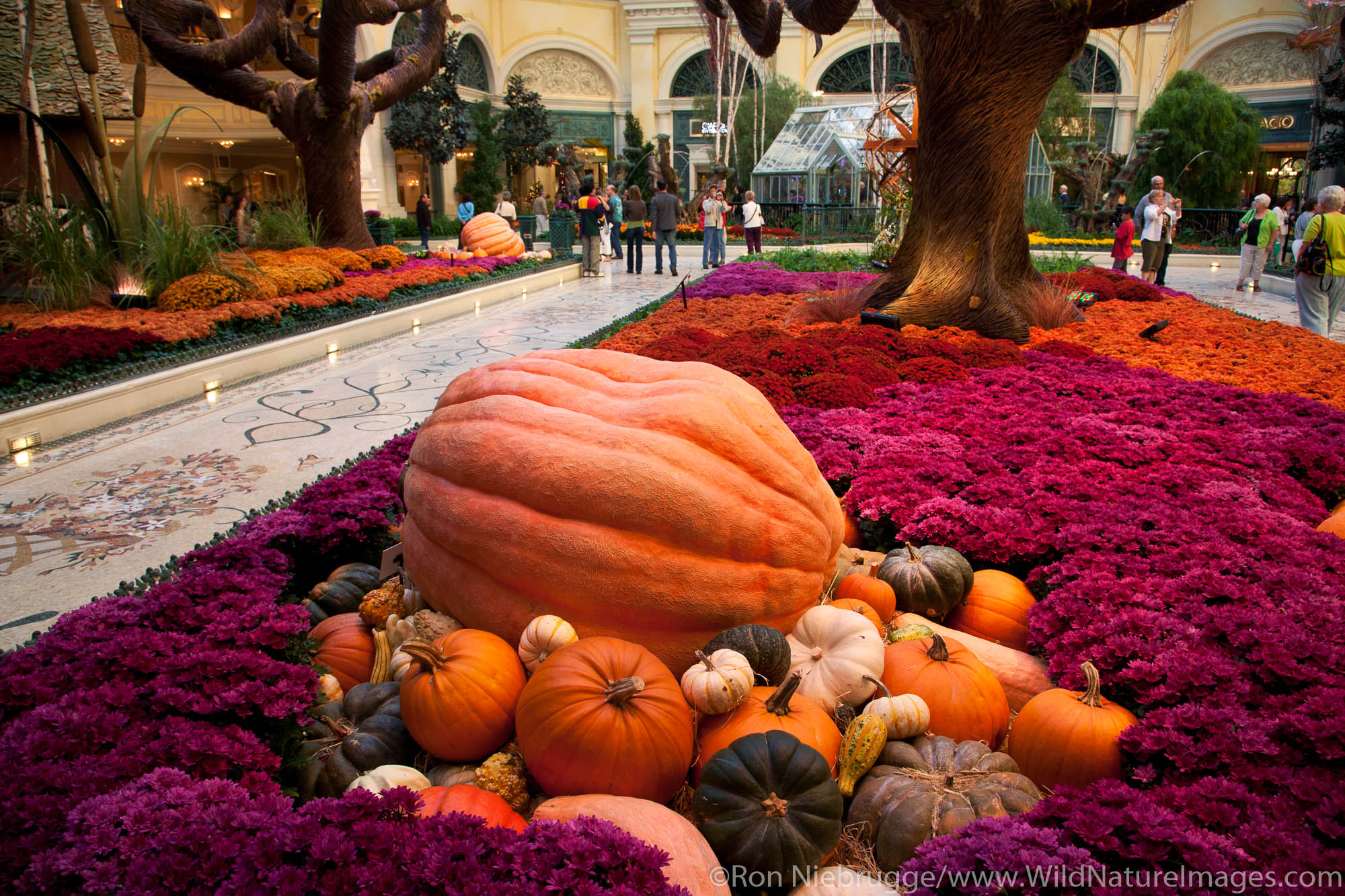 Botanical Gardens inside Bellagio Resort and Casino, Las Vegas, Nevada