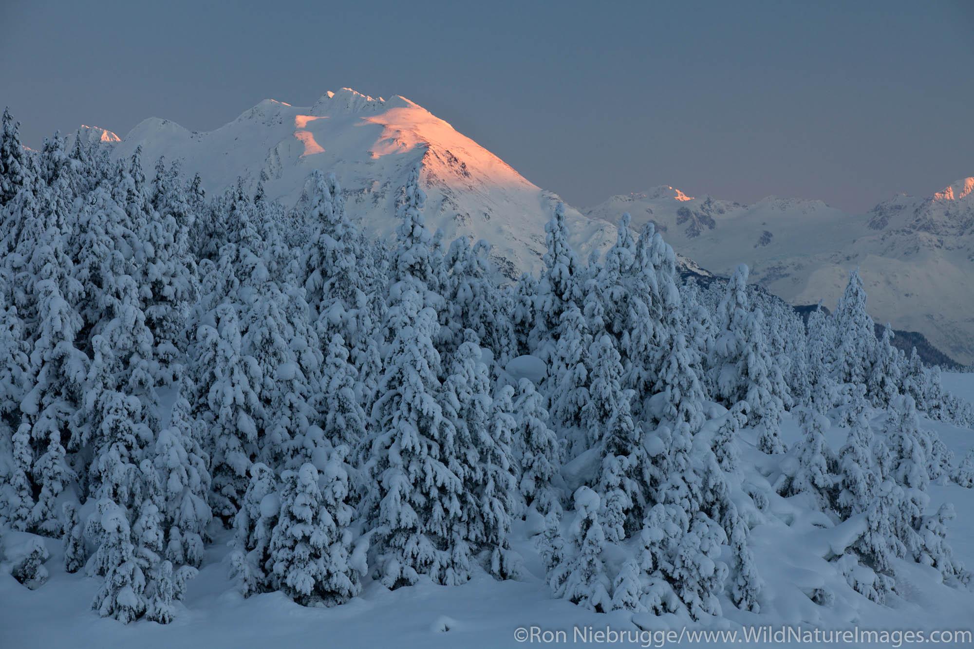 Snow trees in Turnagain Pass, Chugach National Forest, Alaska.