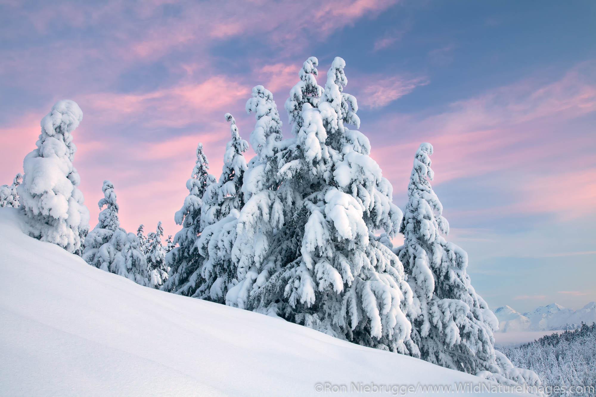 Chugach National Forest, Alaska Chugach, Turnagain Pass, Winter, photo