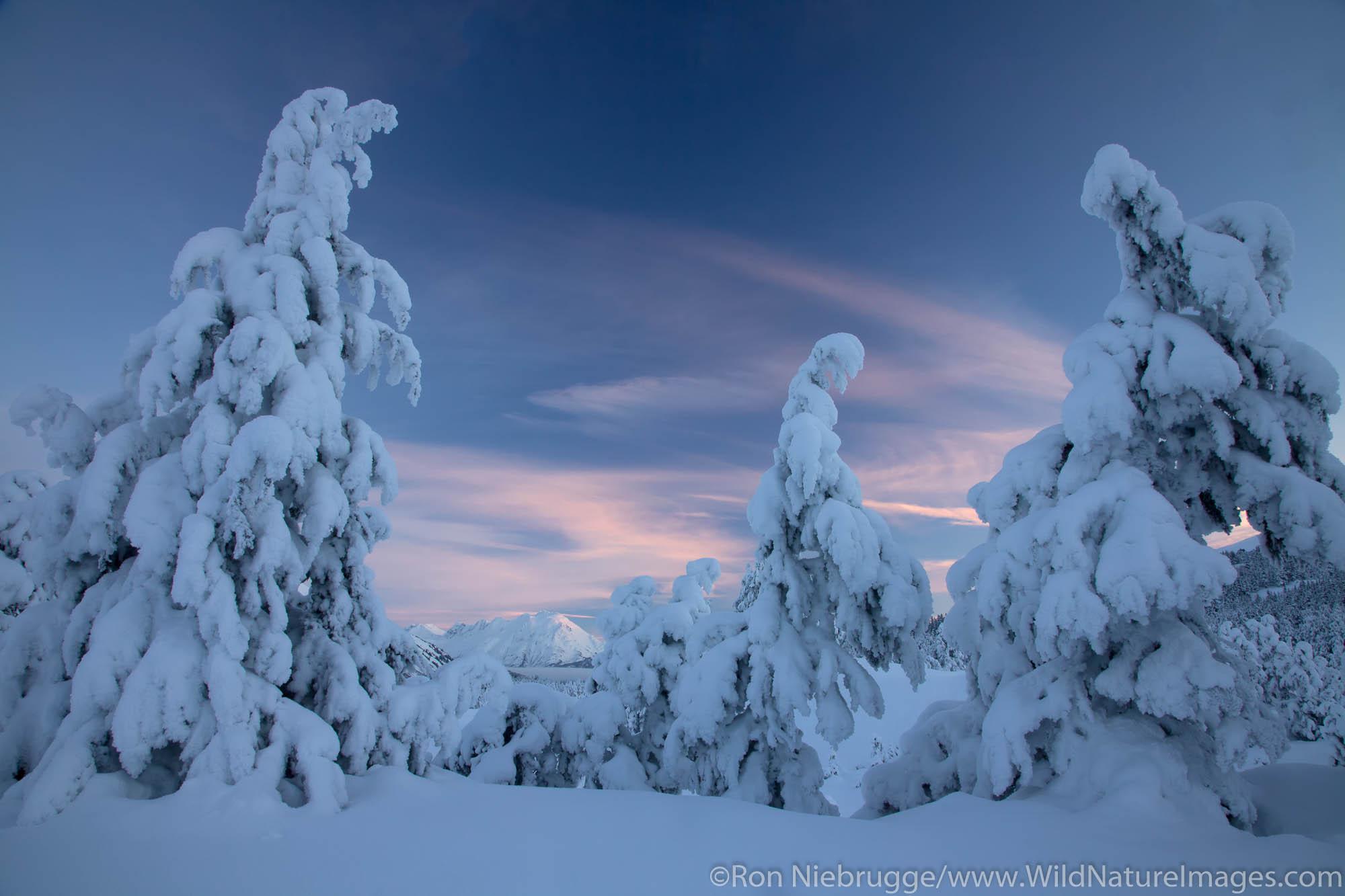 Snowy trees in Turnagain Pass, Chugach National Forest, Alaska.