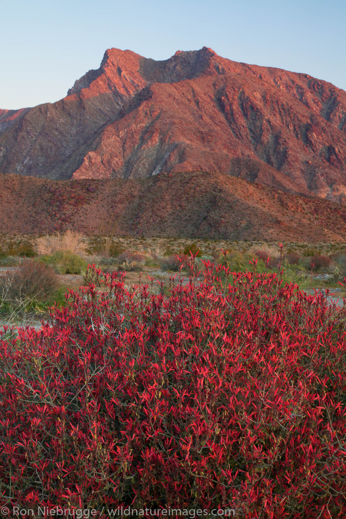 Anza Borrego Desert State Park, California., photo