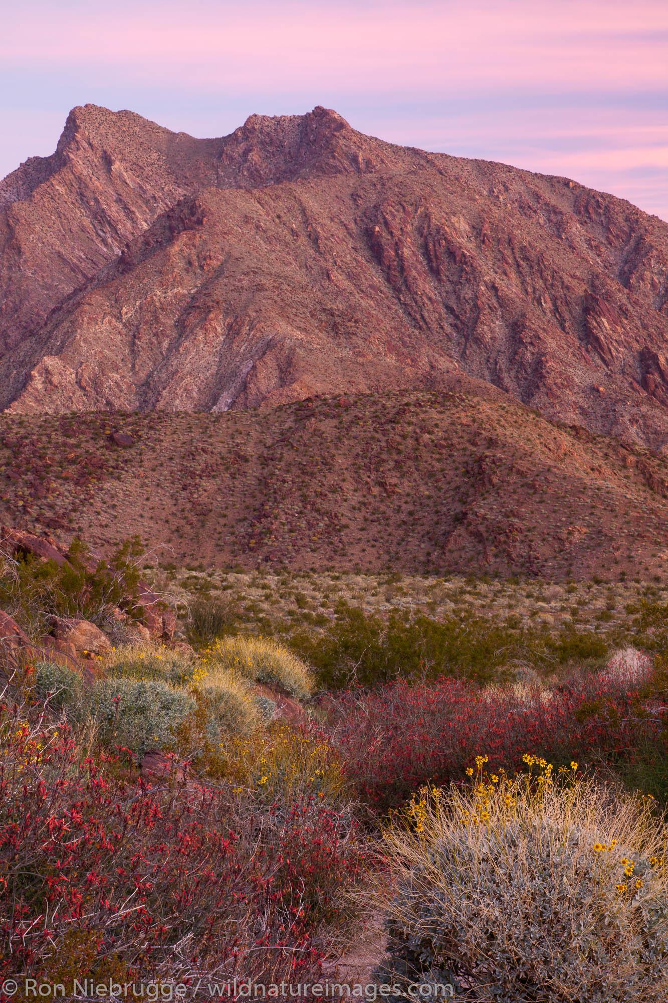 Anza Borrego Desert State Park, California., photo