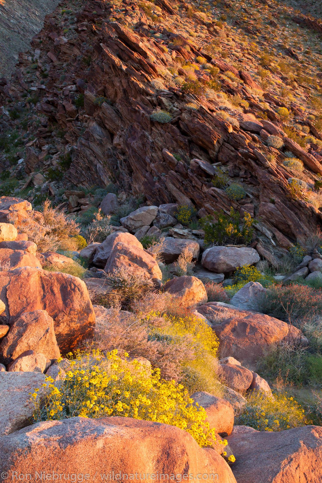 Anza-Borrego Desert State Park, California.
