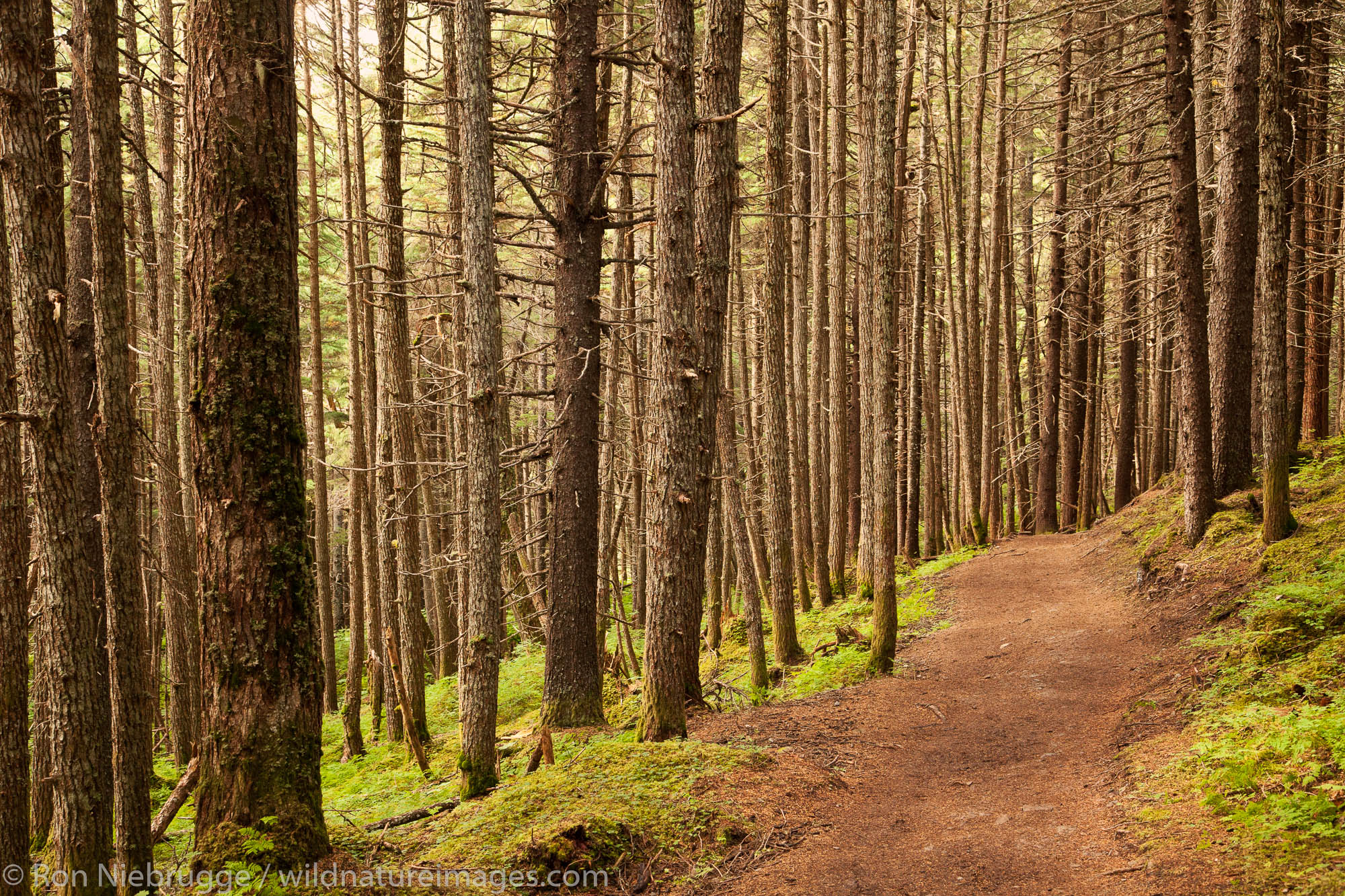 Winner Creek Trail, Chuagch National Forest, Alaska.