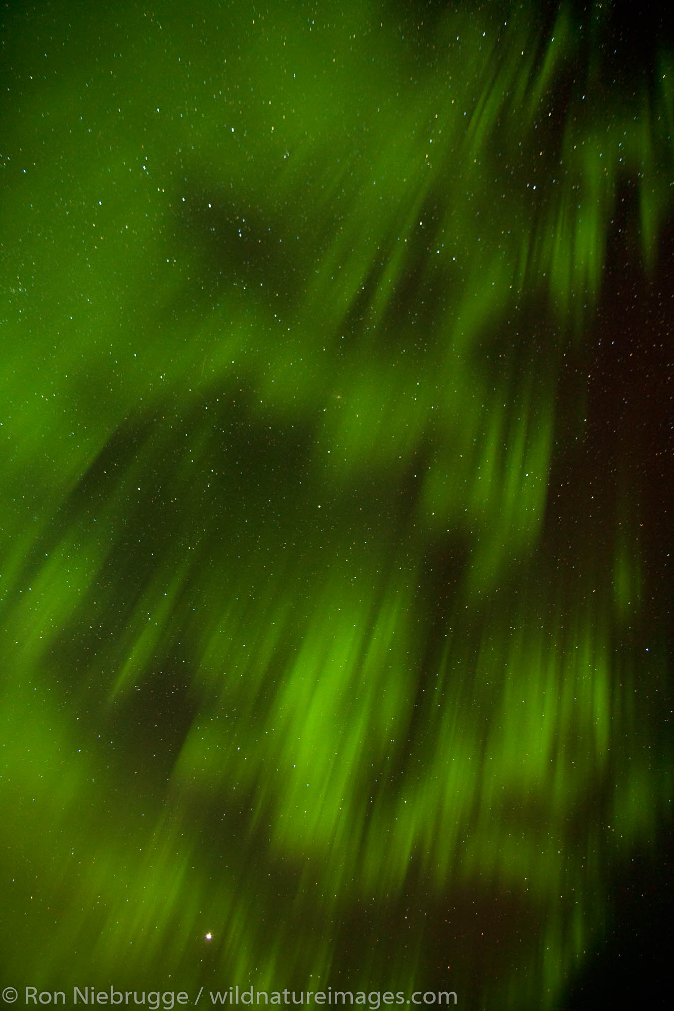 Aurora Borealis, Denali National Park, Alaska.