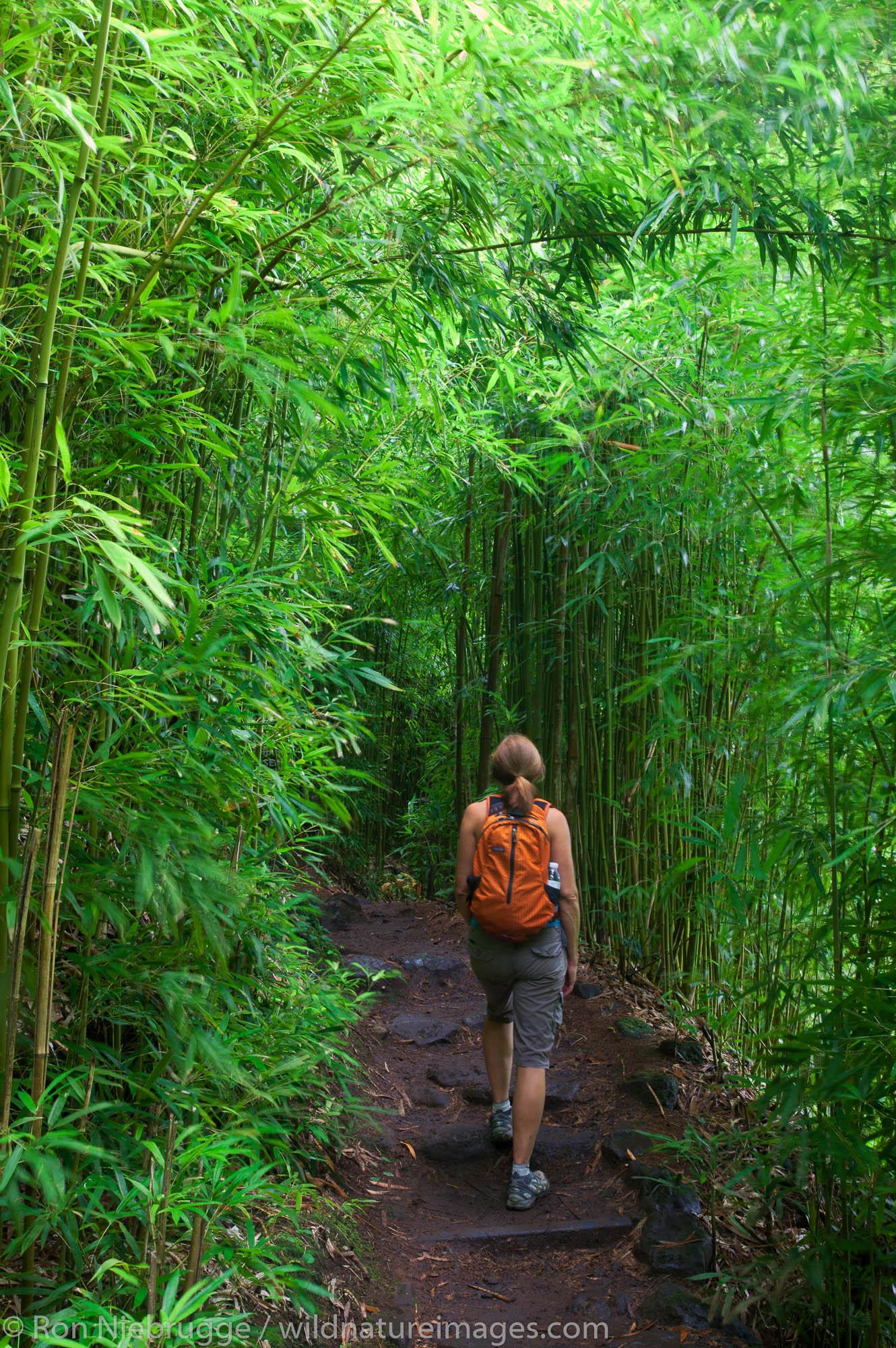 Hiker on the the Pipiwai Trail above the Ohe'o Gulch - aka Seven Sacred Pools, Haleakala National Park, near Hana, Maui, Hawaii...