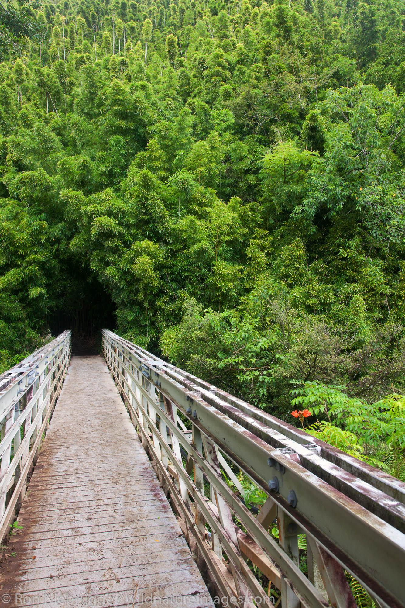 Along the Pipiwai Trail above the Ohe'o Gulch - aka Seven Sacred Pools, Haleakala National Park, near Hana, Maui, Hawaii.