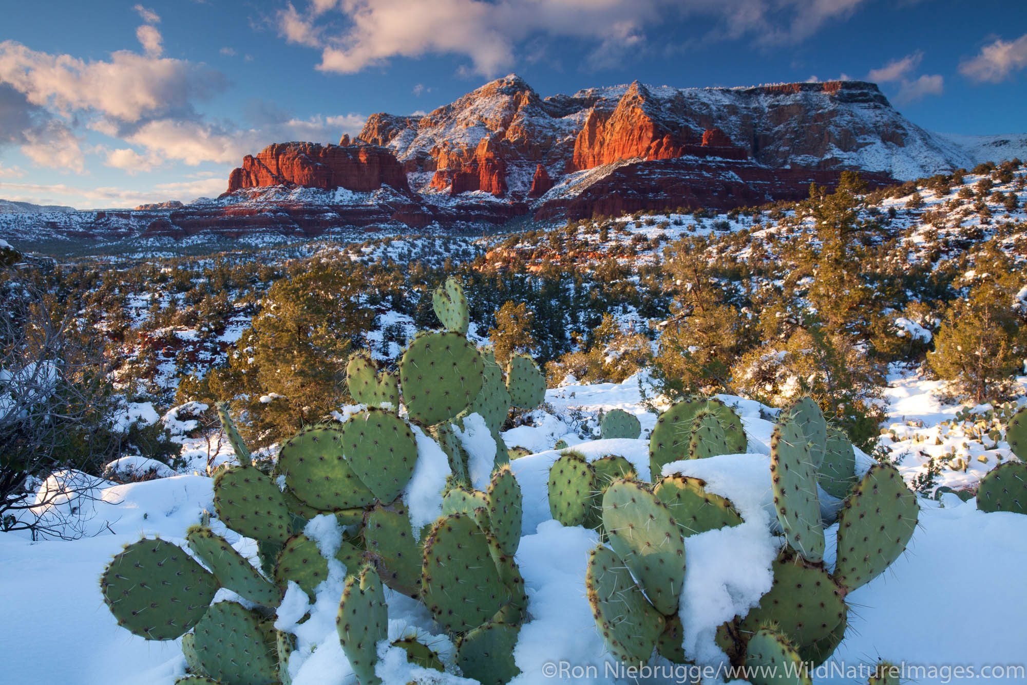 Winter snow on Schnebly Hill, Coconino National Forest, Sedona, Arizona.