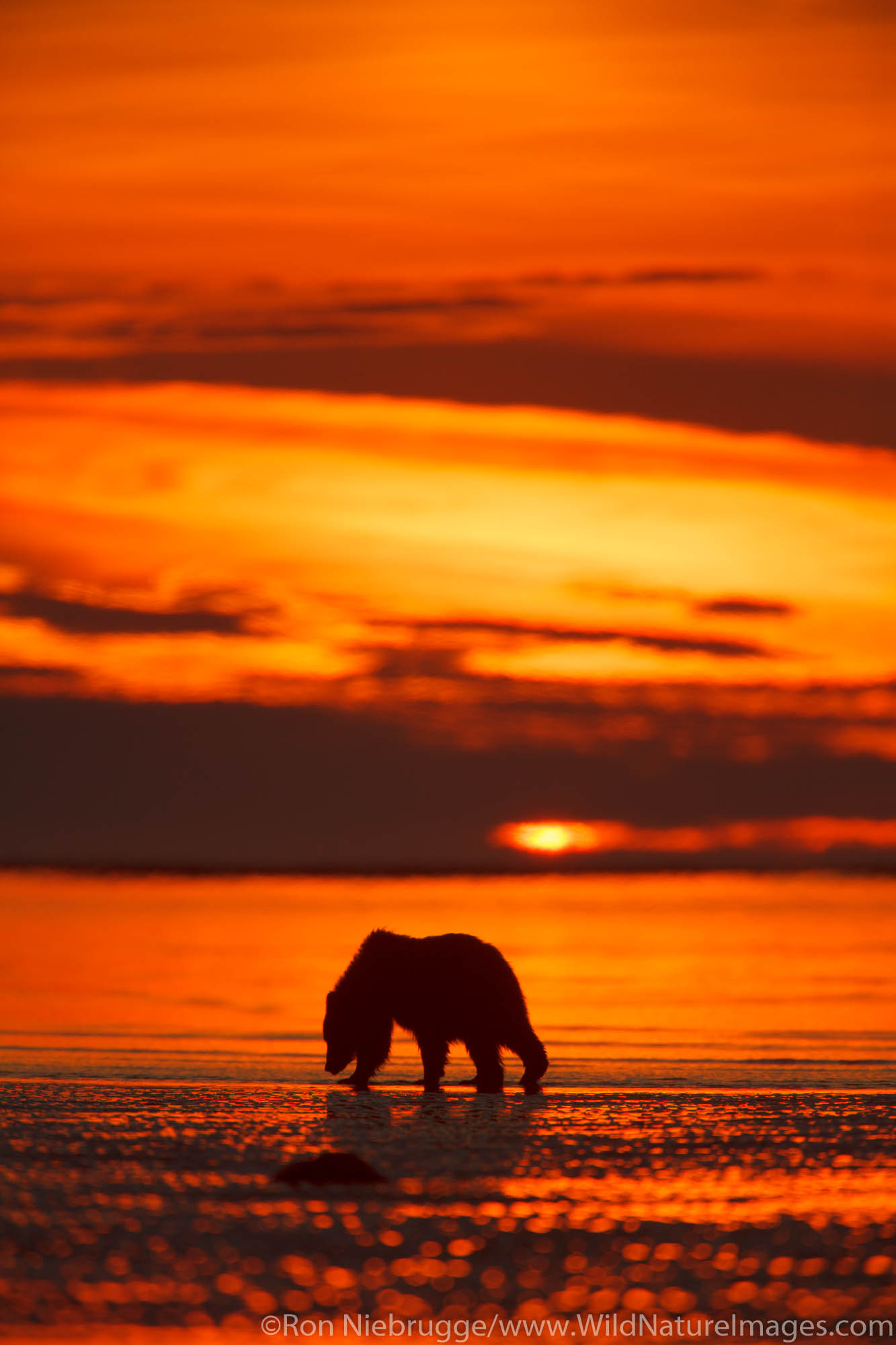 Lake Clark National Park, Alaska, brown bear, bears, grizzly, photo