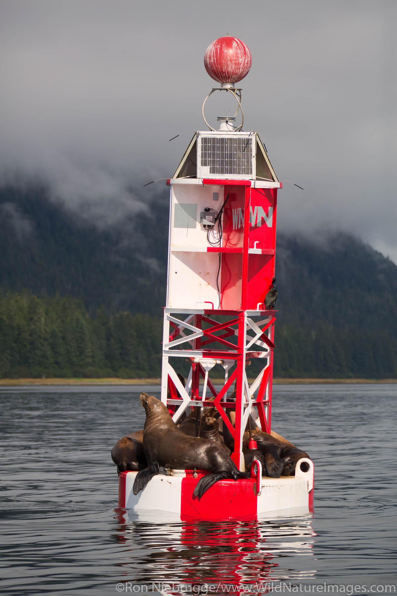Sea lions on a buoy, Petersburg, Alaska.