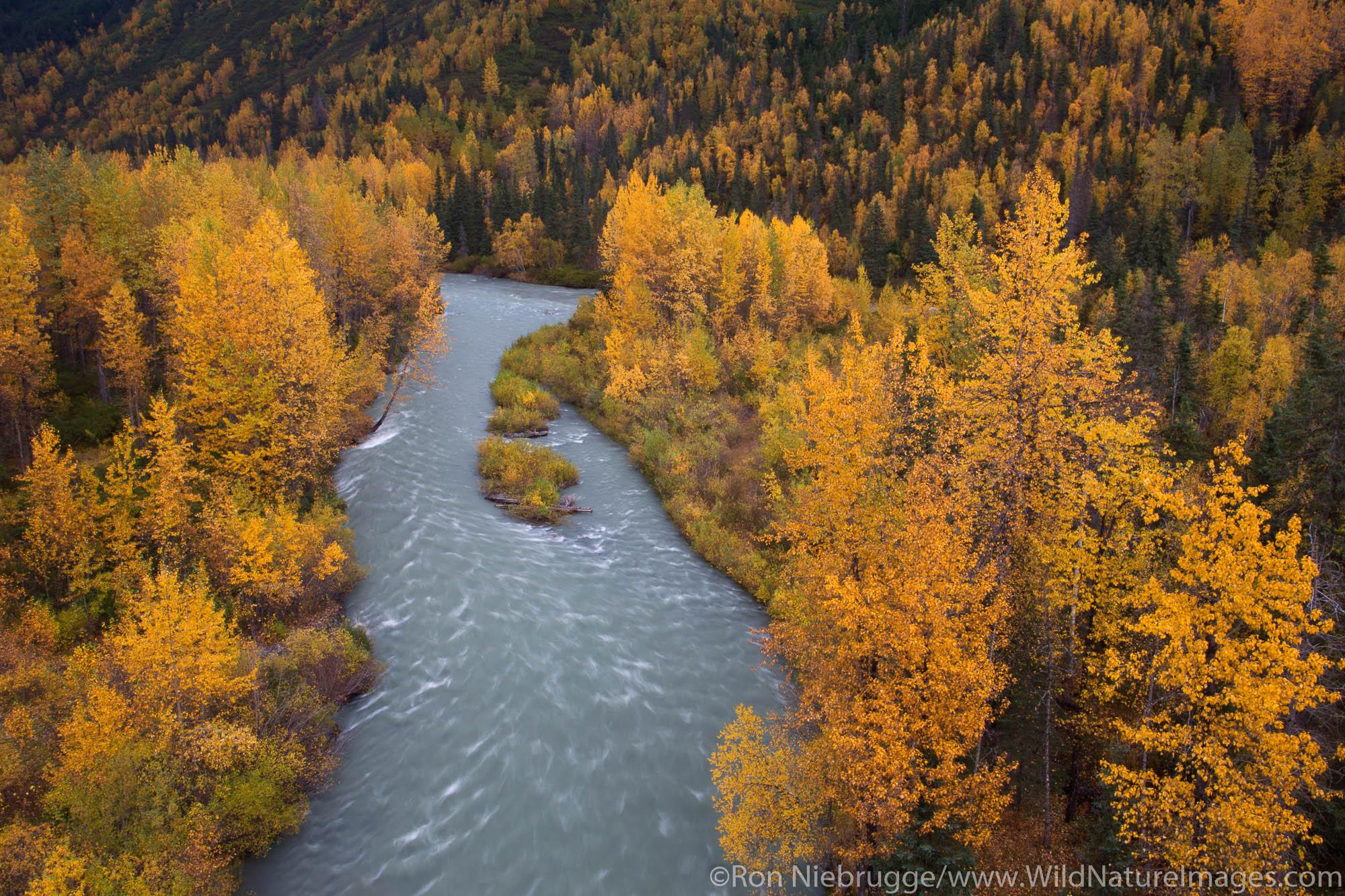 Autumn colors at Canyon Creek, Chugach National Forest, Alaska.
