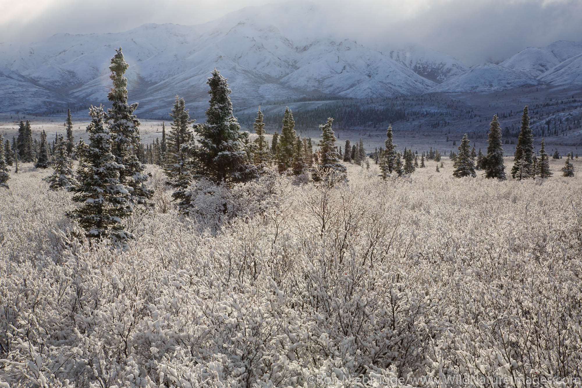 Winter in Denali National Park, Alaska.