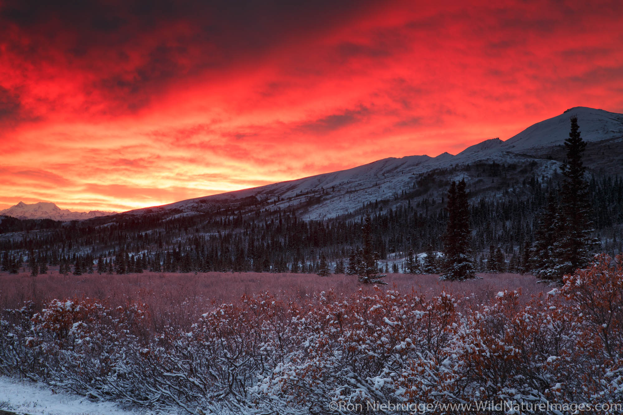 Sunrise over Denali National Park, Alaska.