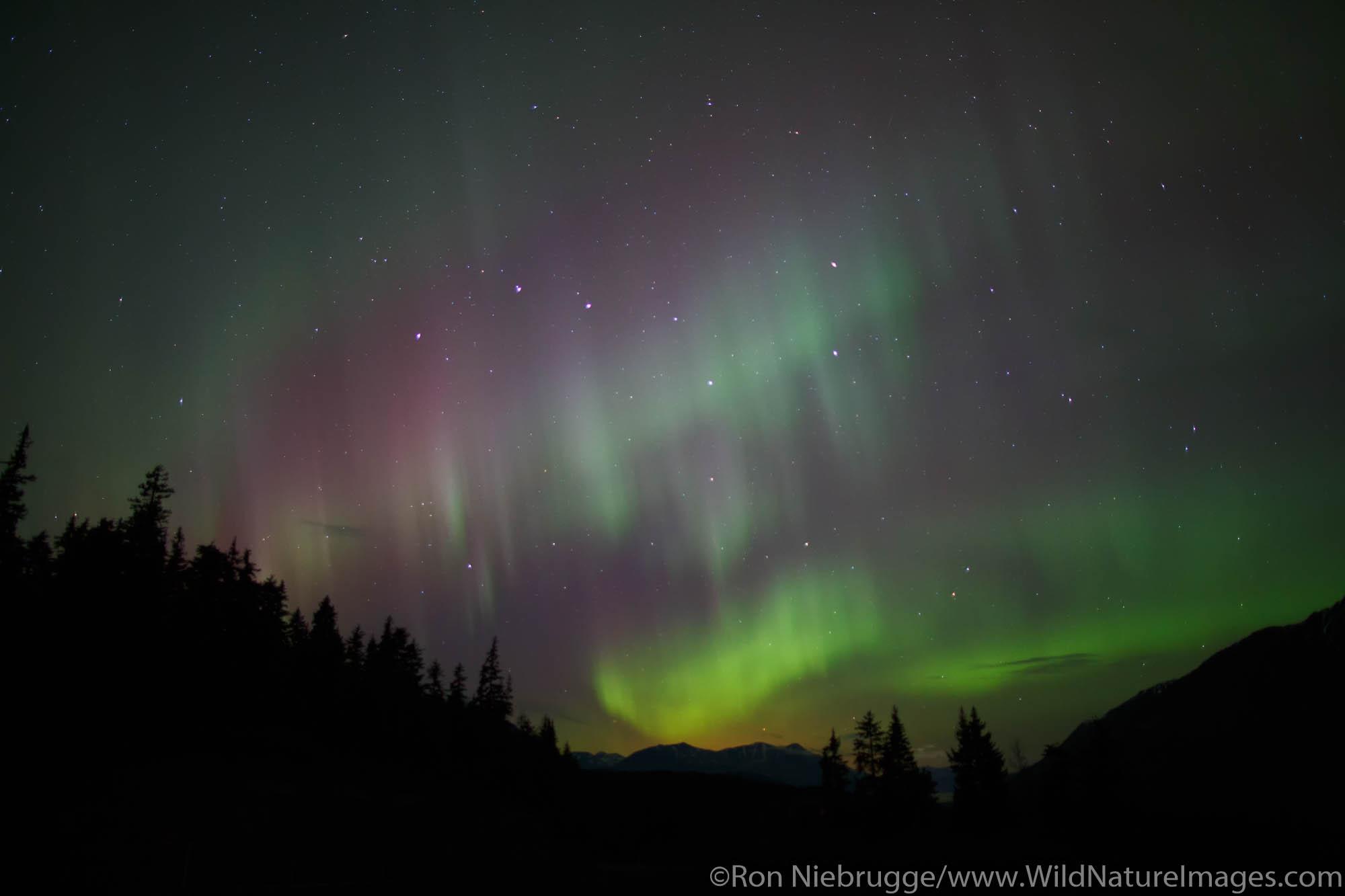 Northern Lights over the Chugach National Forest, Alaska.