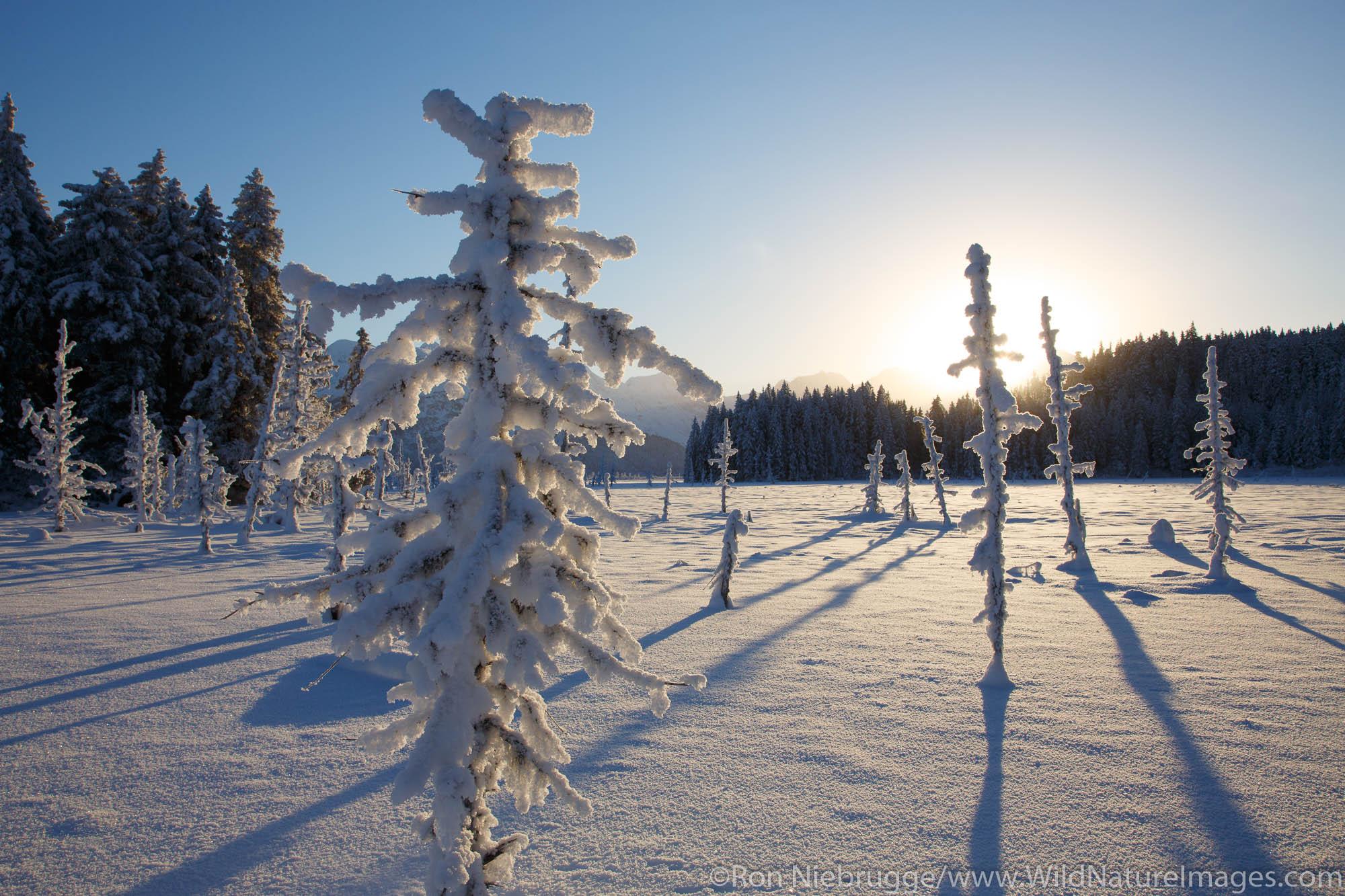 Winter in the Chugach National Forest, Alaska.