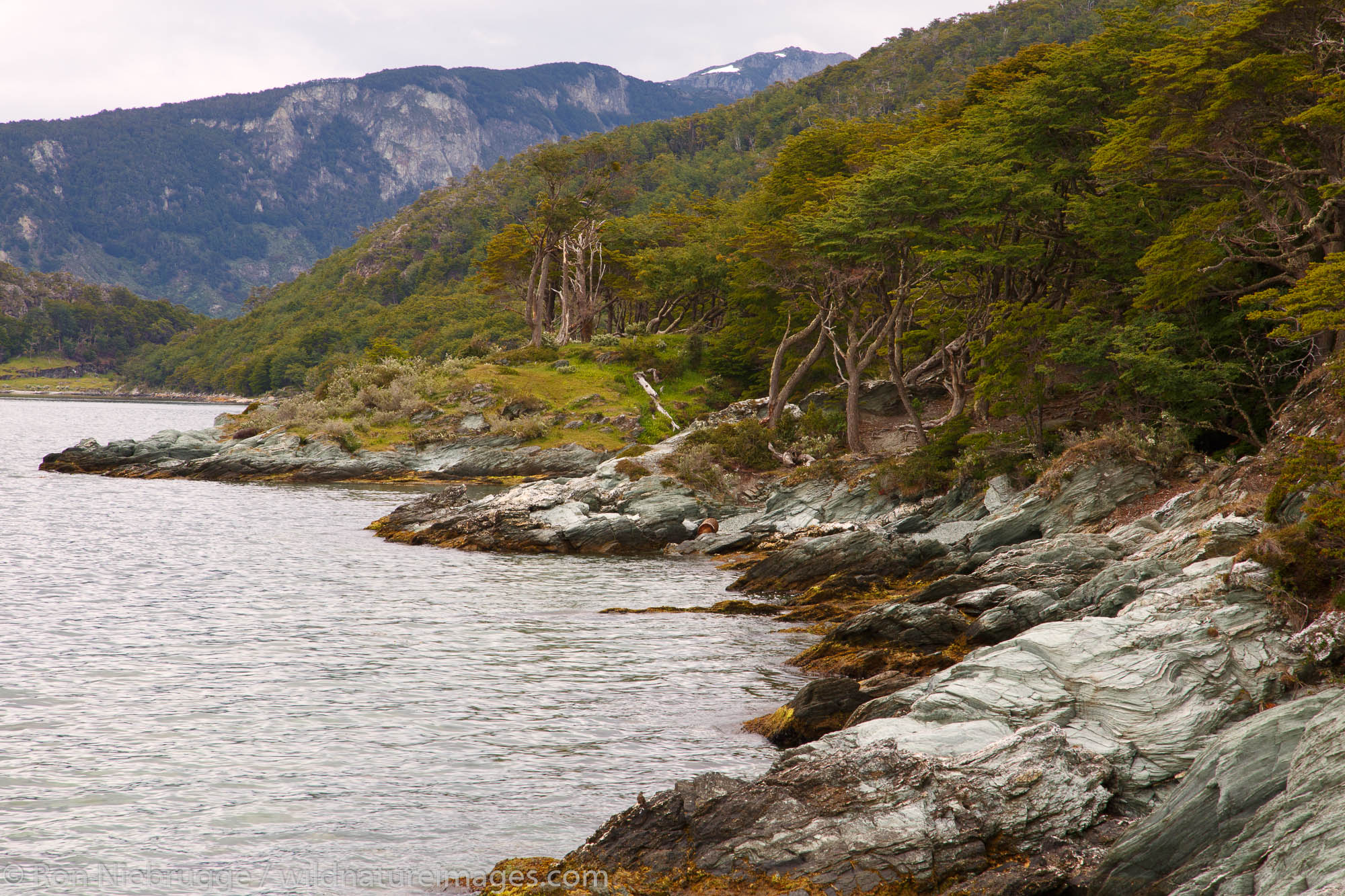 Coastal Trail, Tierra del Fuego National Park, Ushuaia, Argentina.