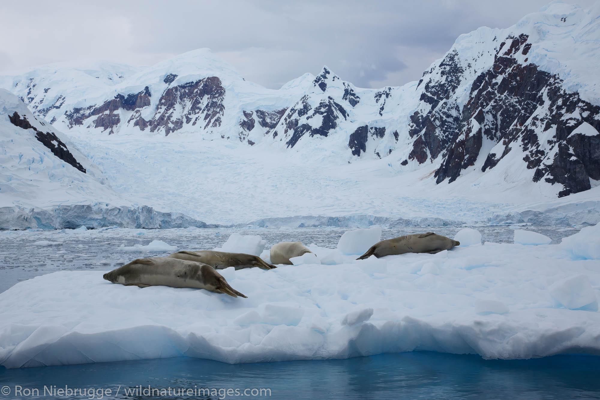 Antarctica, Paradise Bay, photo