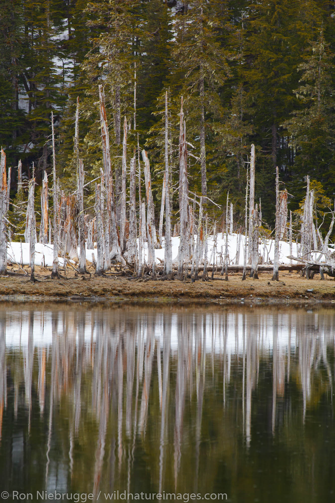 Trees in College Fjord, Prince William Sound, Chugach National Forest, Alaska.