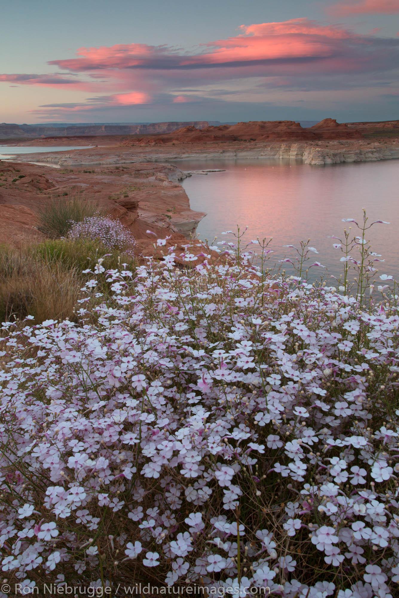 Lake Powell Glen Canyon National Recreation Area Arizona.