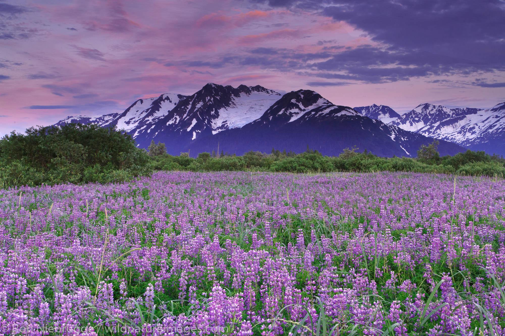 Chugach National Forest, Alaska Chugach, photo